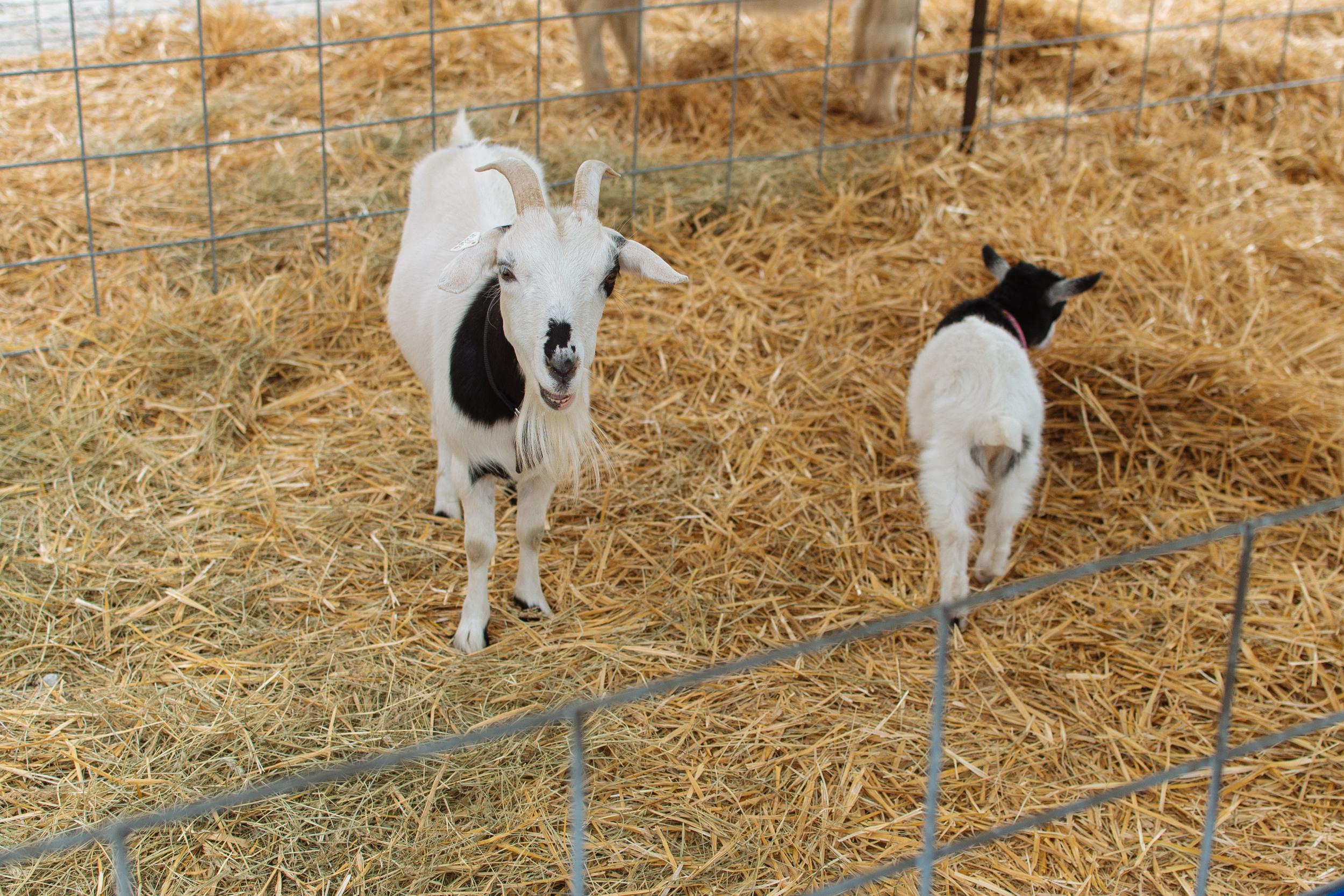 farm-21.jpg