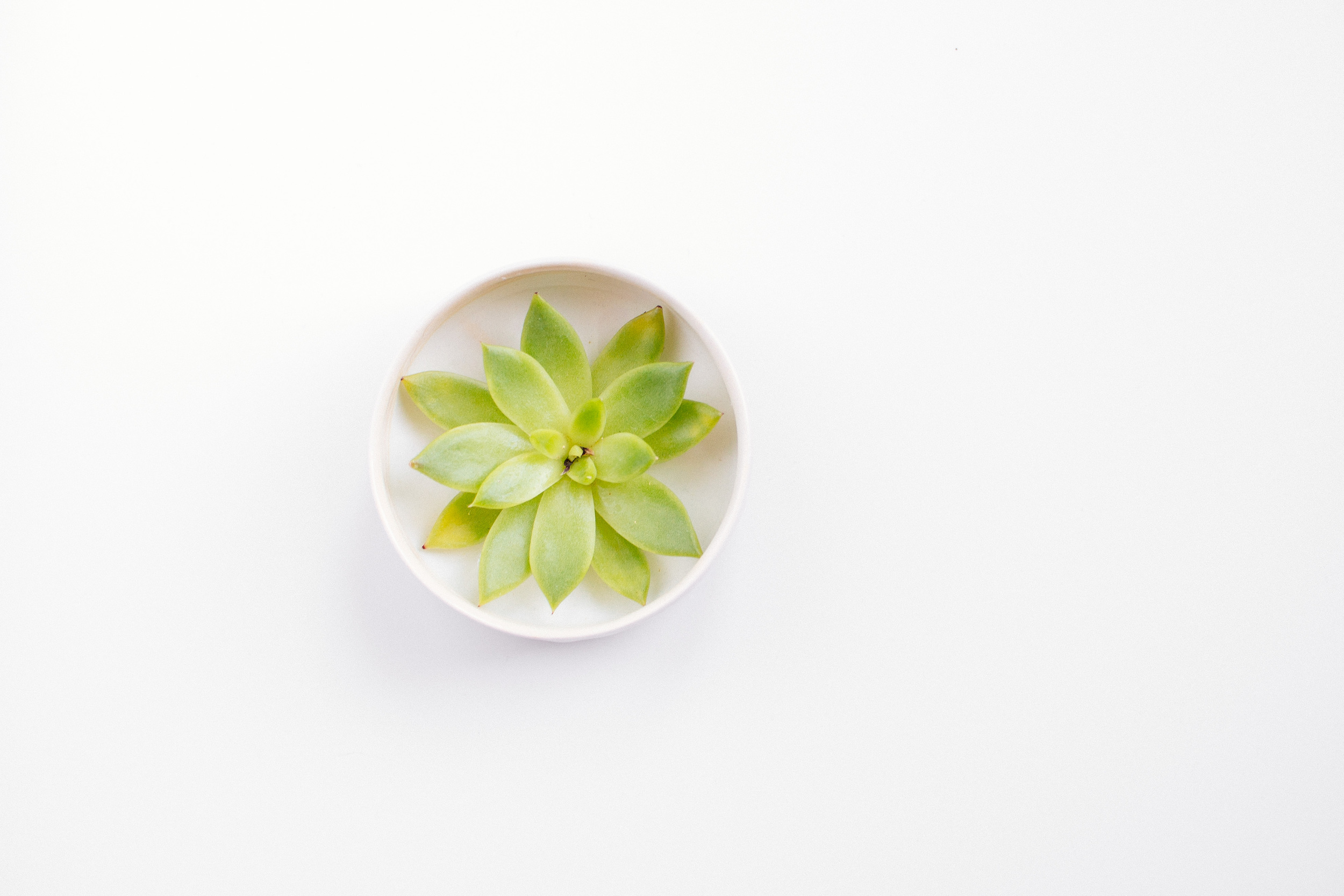 plants-14.jpg