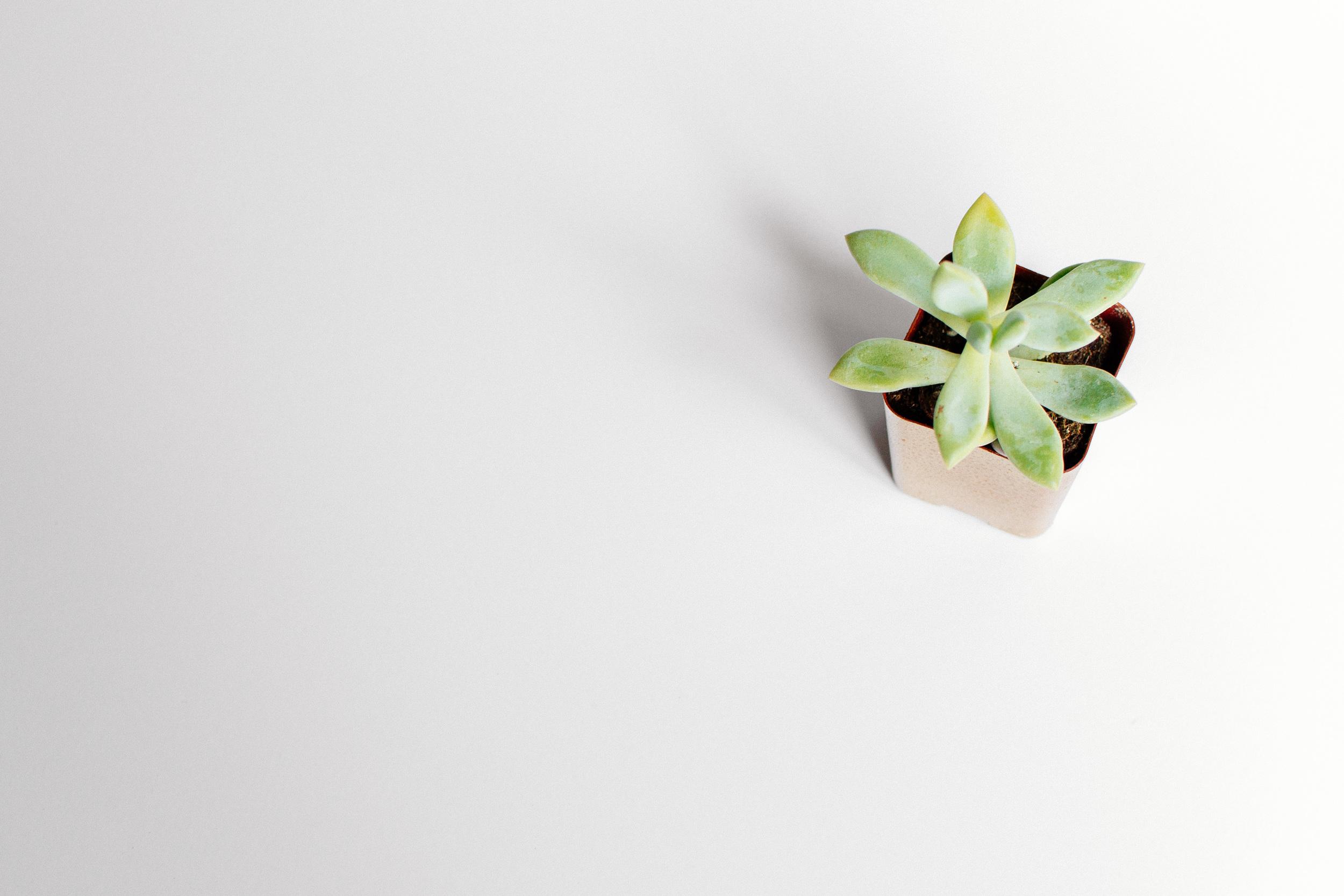 plants-22.jpg