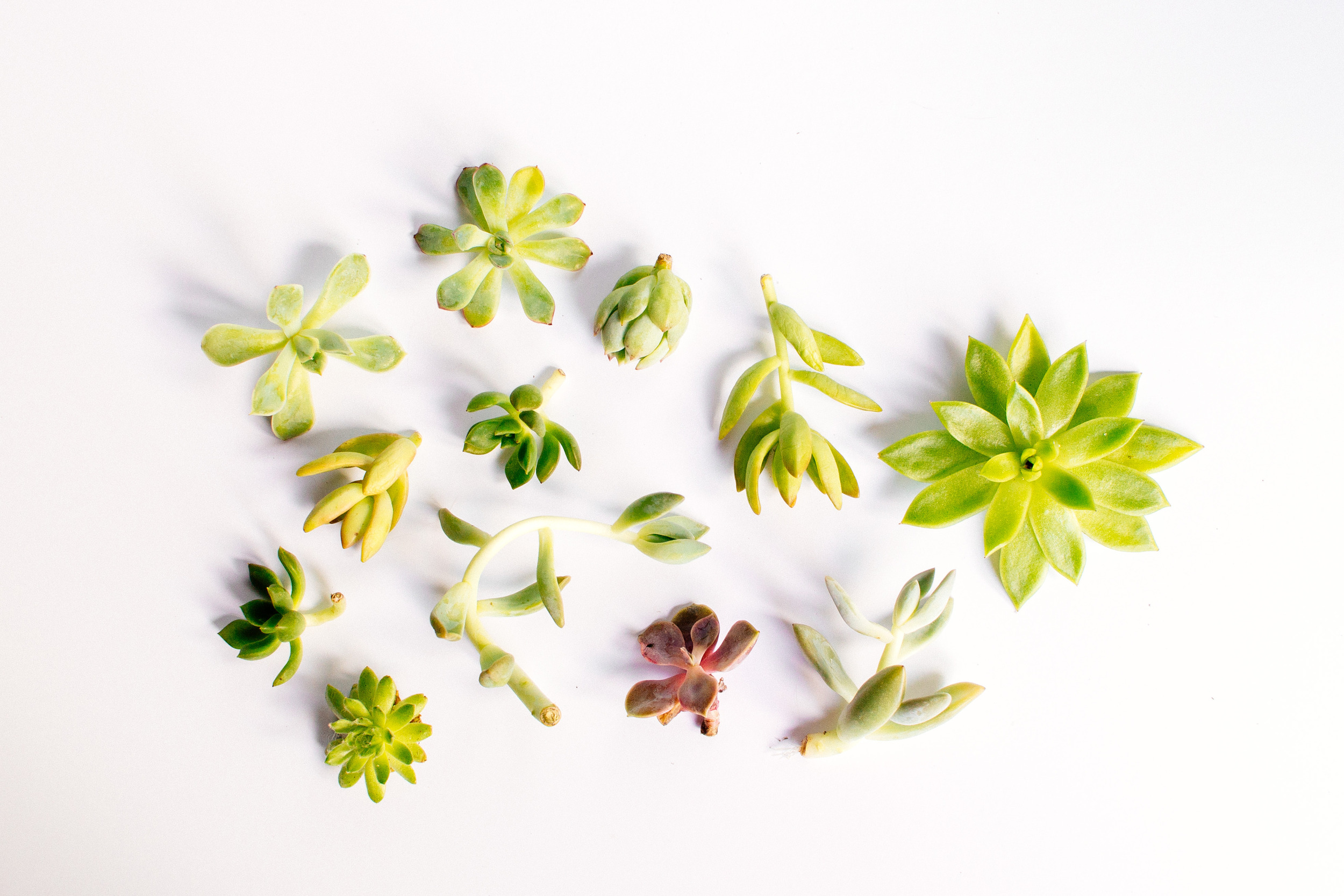 succulents-2.jpg