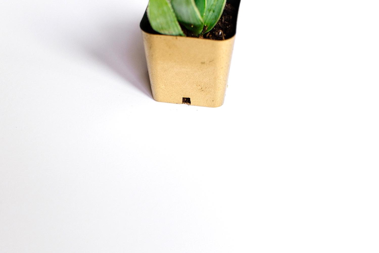 plants-19.jpg