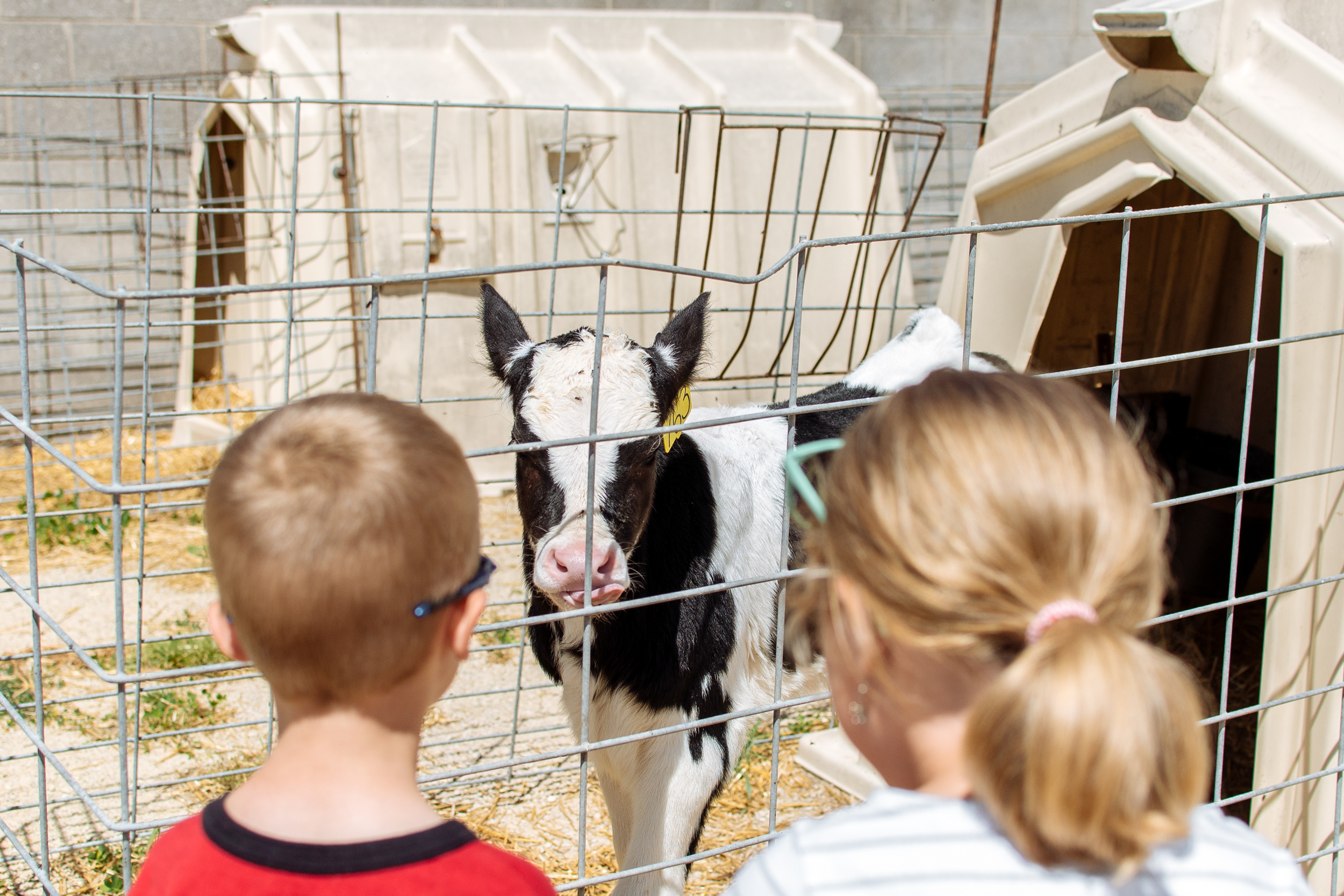 farm-14.jpg