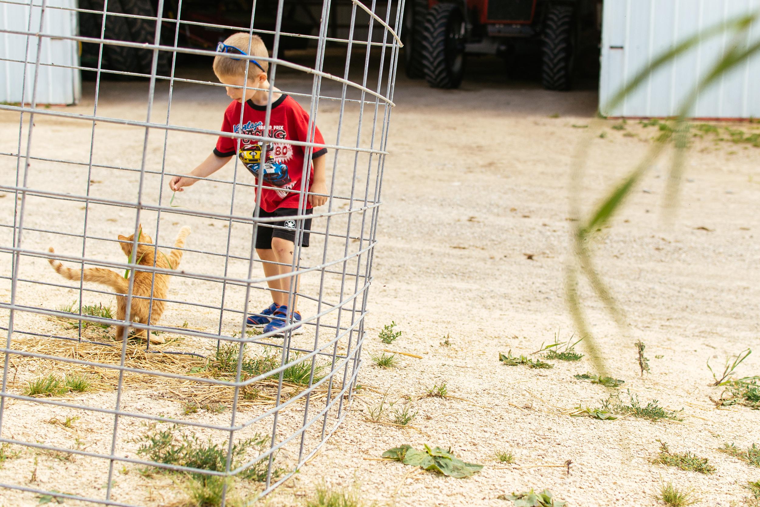 farm-46.jpg