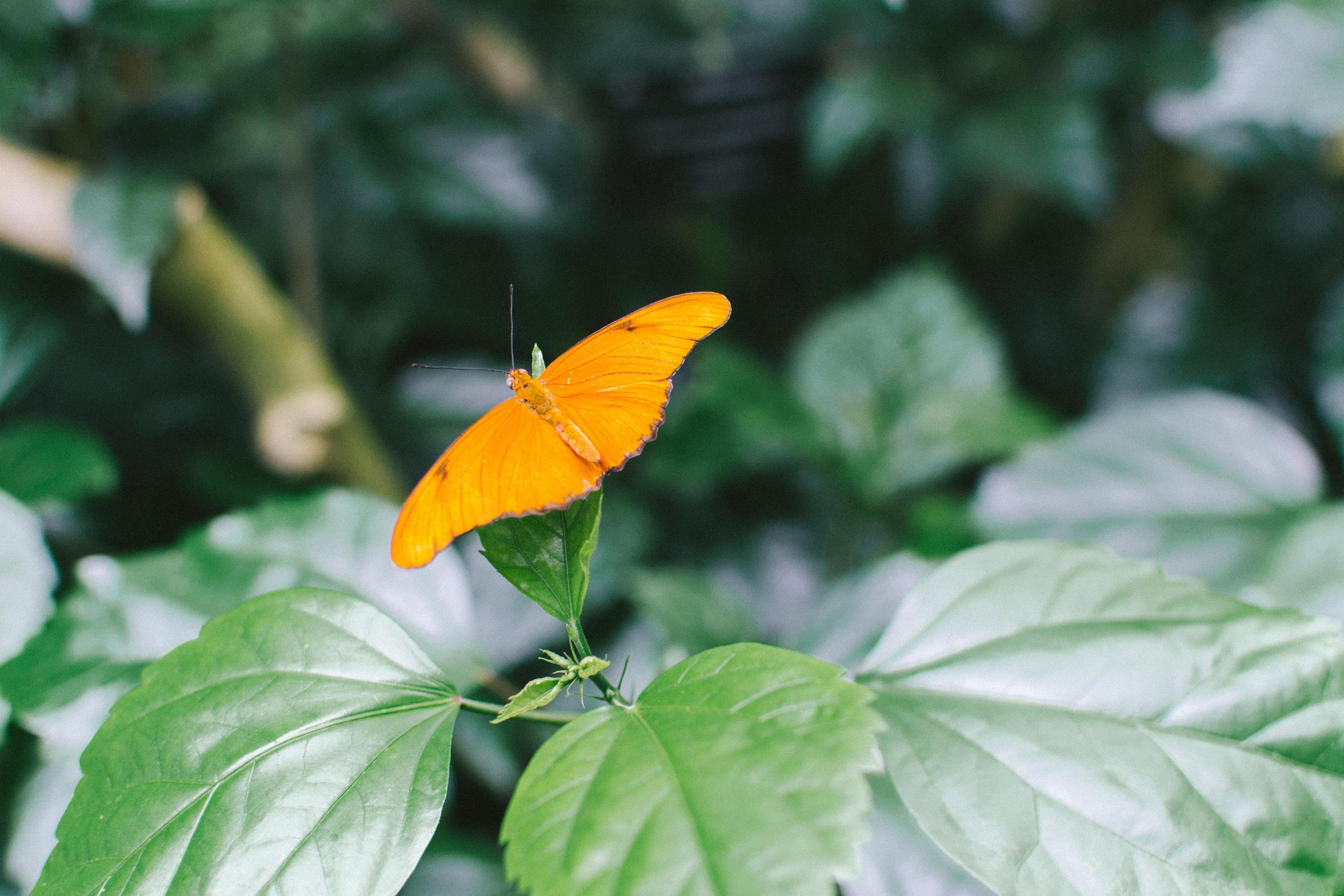 butterflies-1.jpg