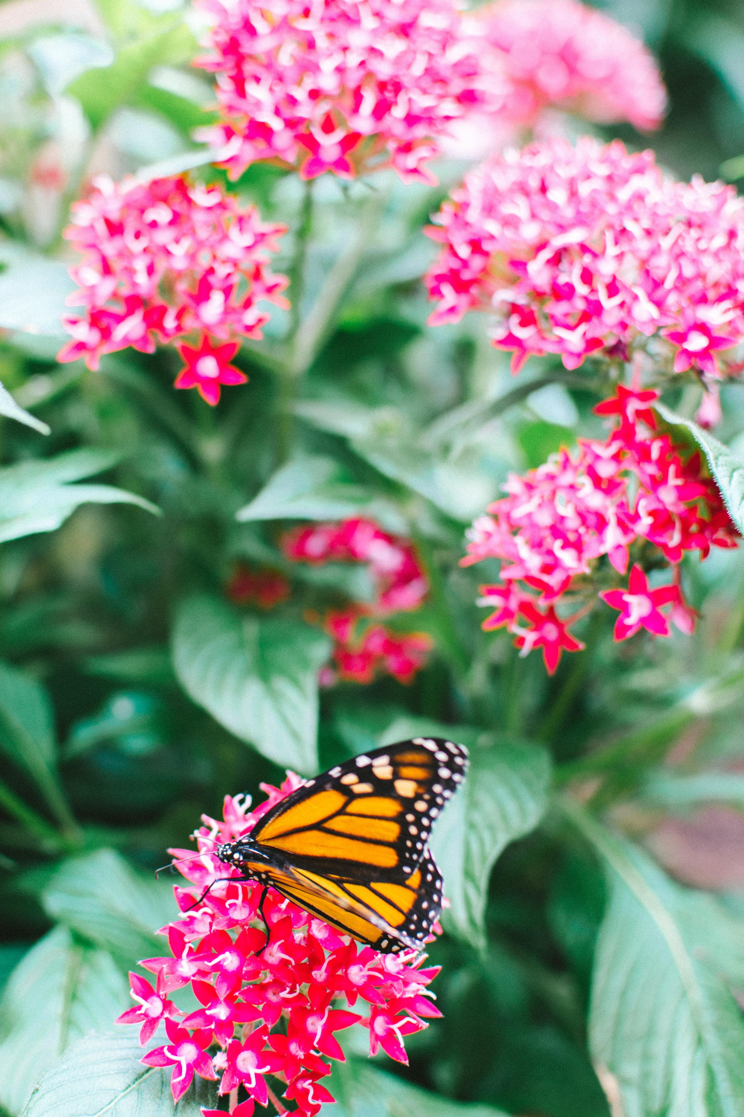 butterflies-6.jpg