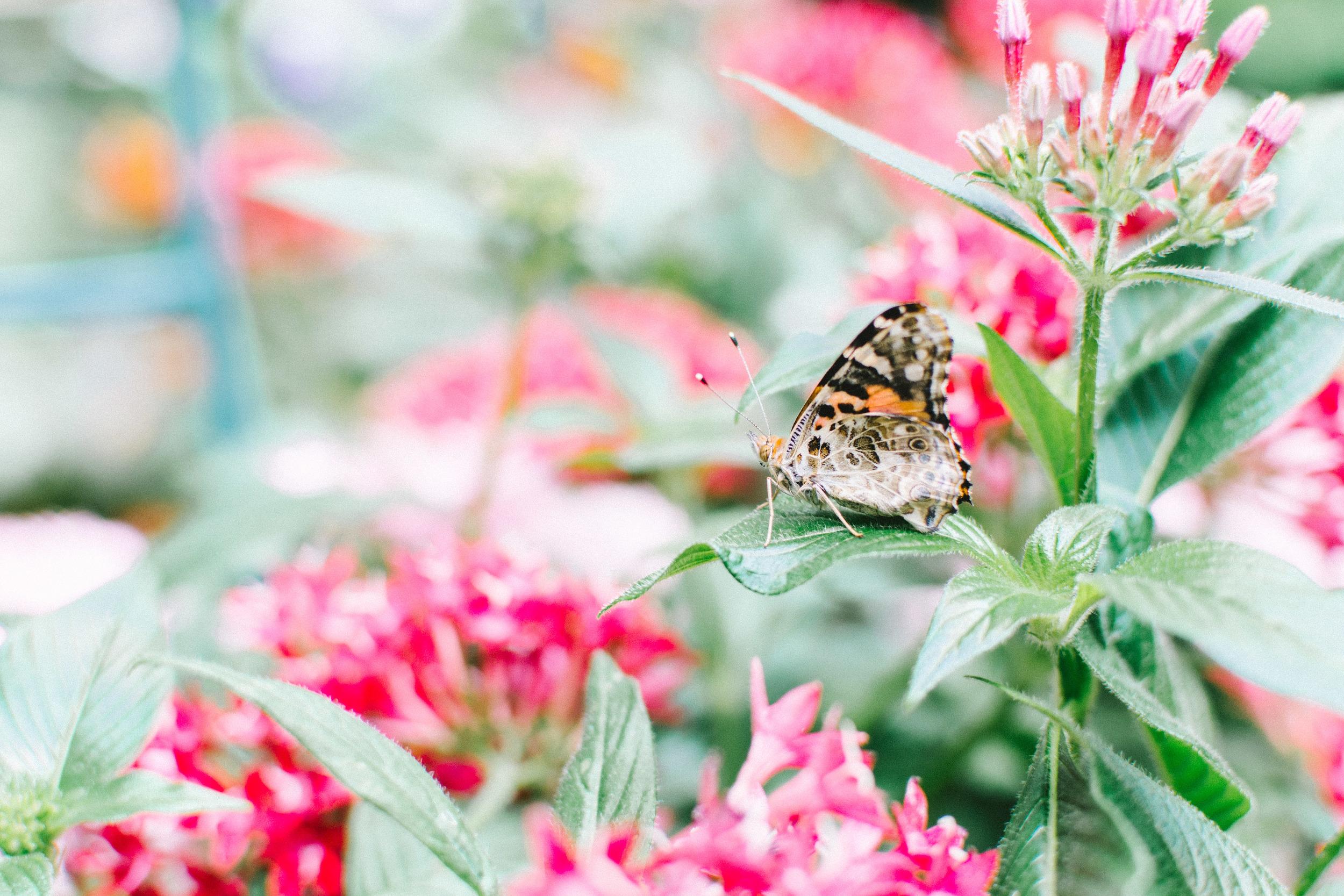 butterflies-18.jpg