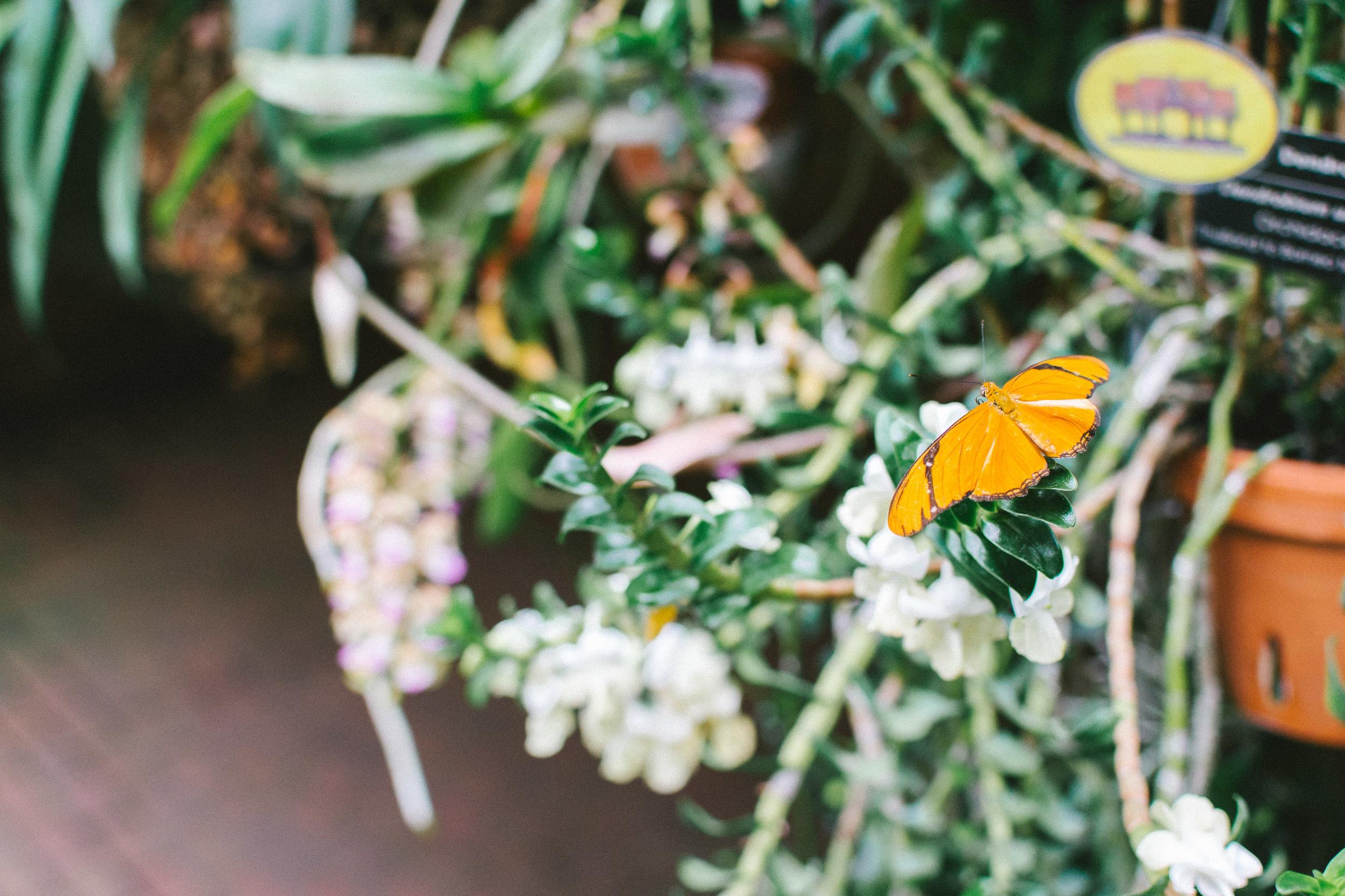 butterflies-21.jpg