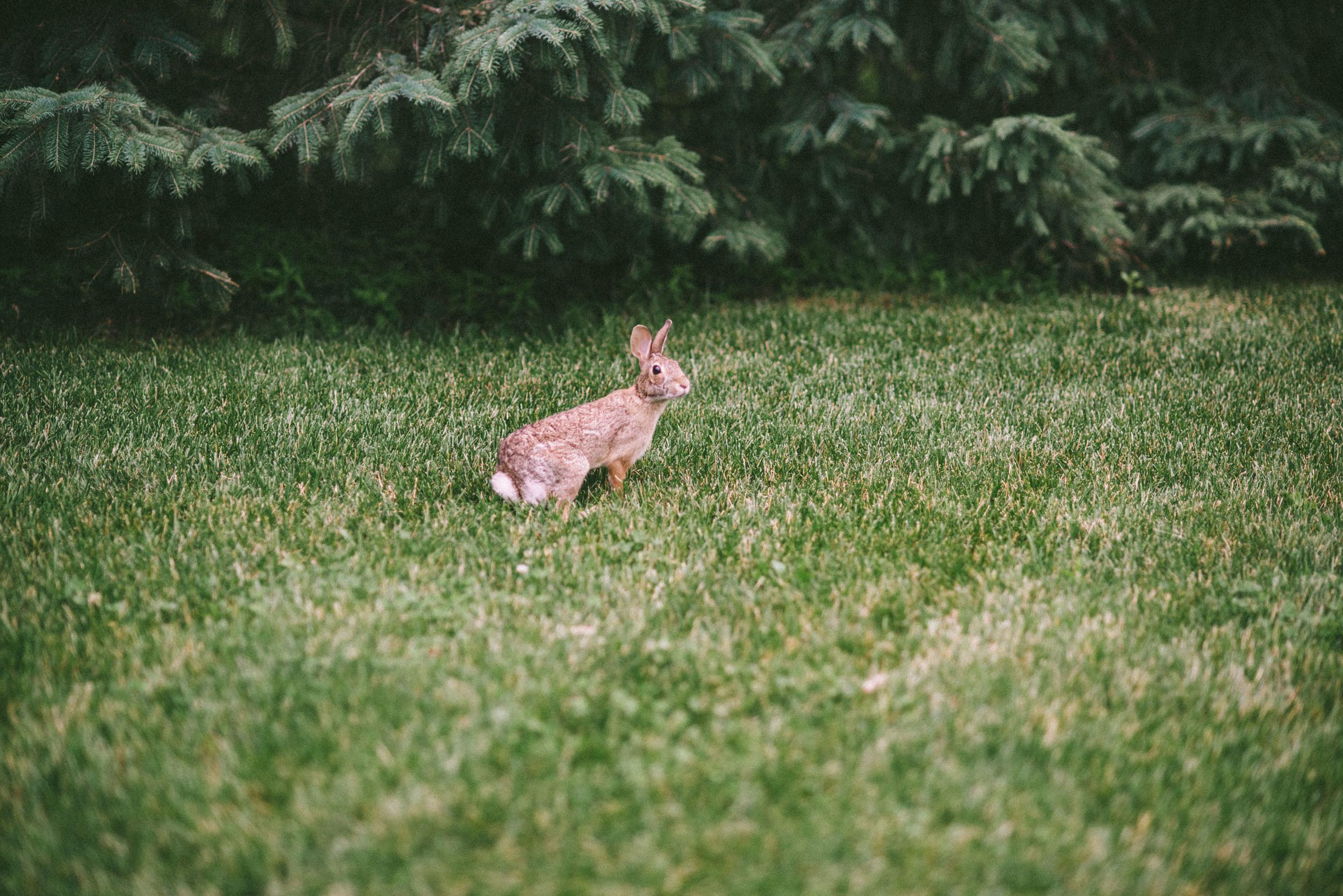 bunny-4.jpg