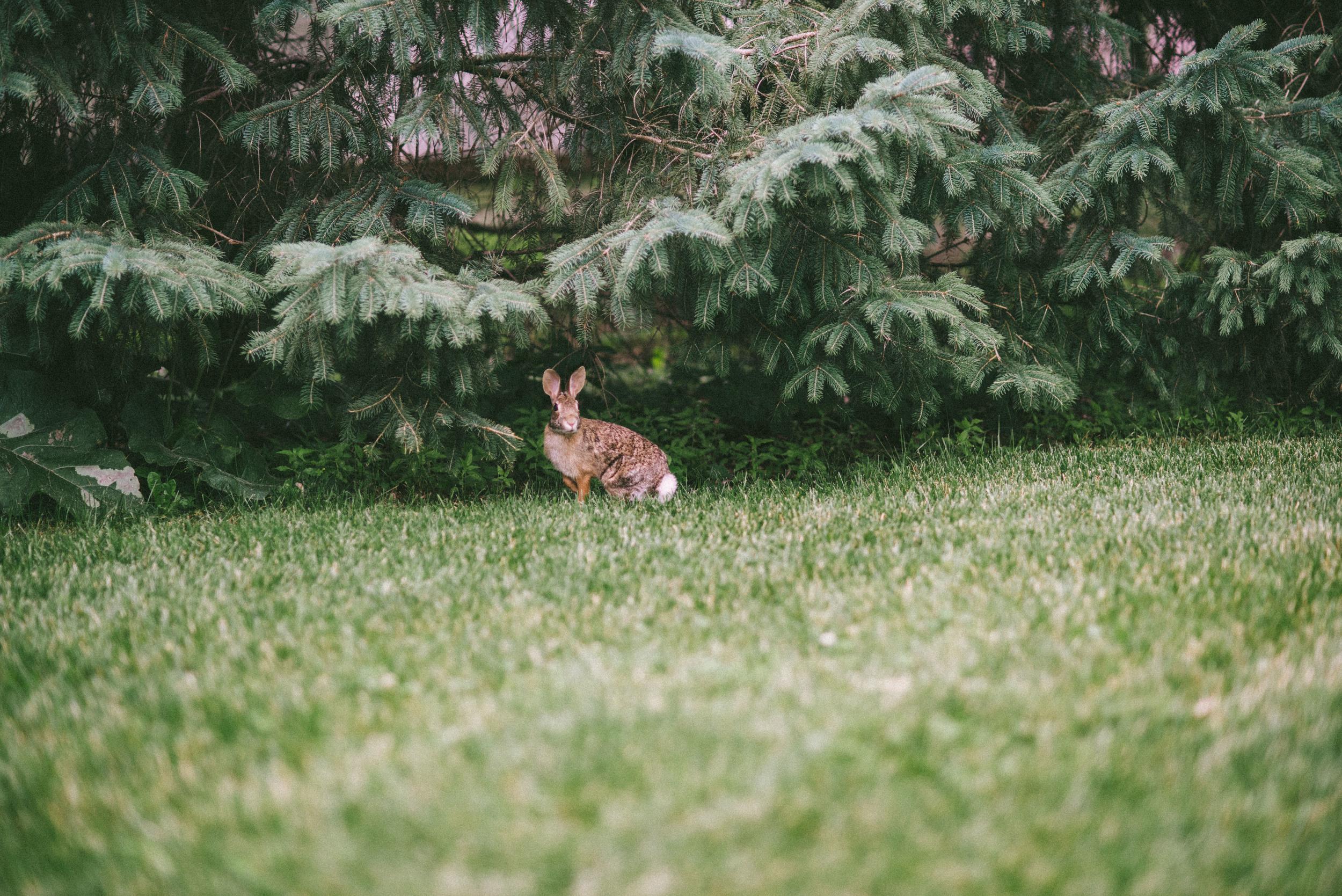 bunny-5.jpg