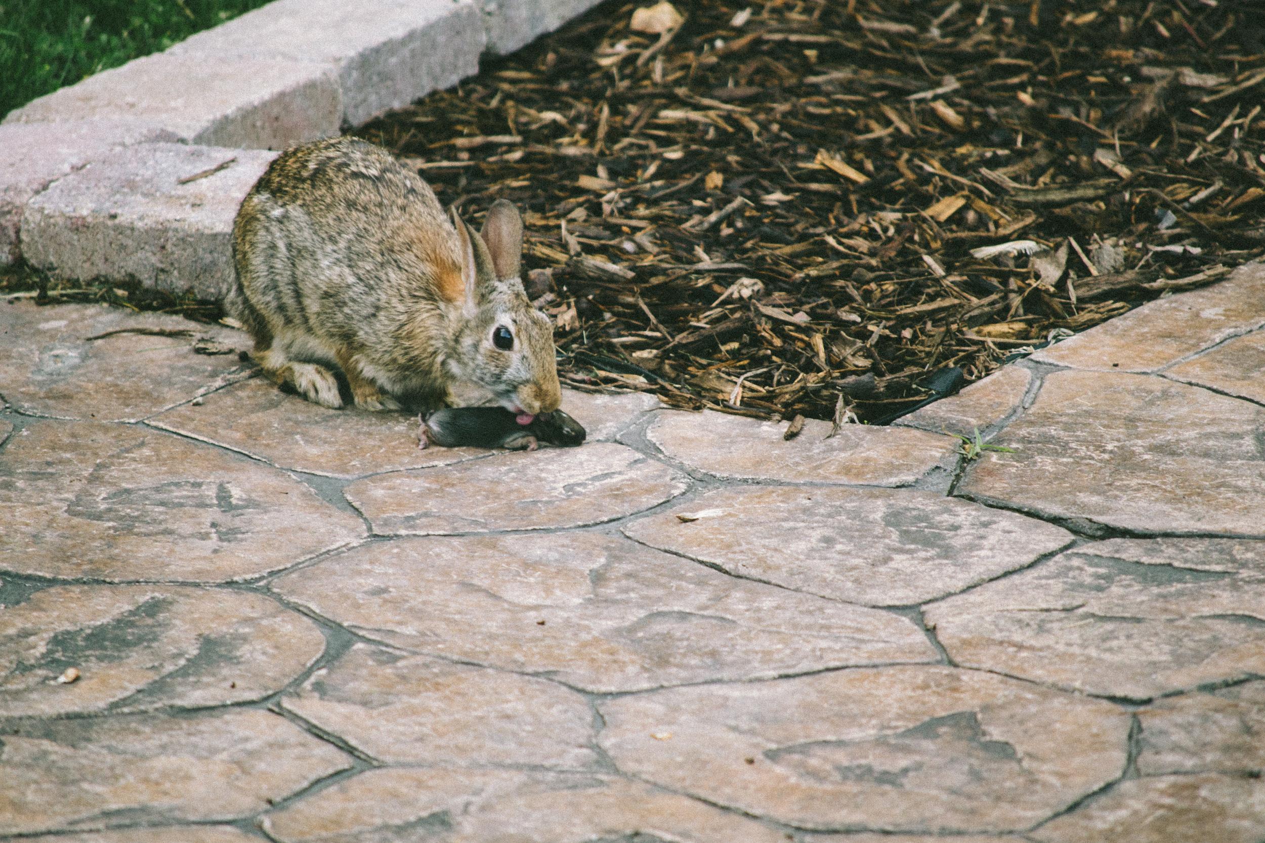 bunny-7.jpg