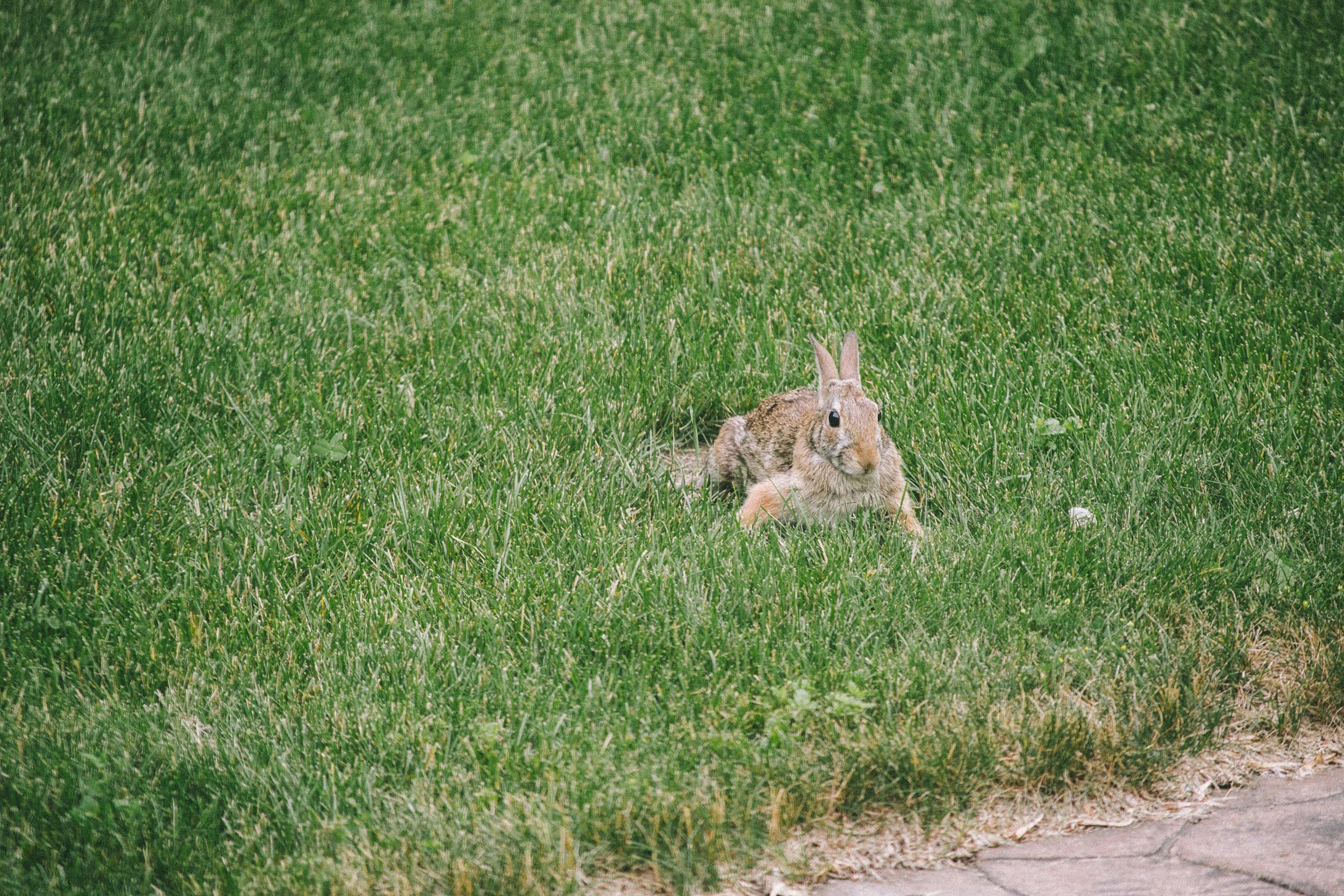 bunny-9.jpg