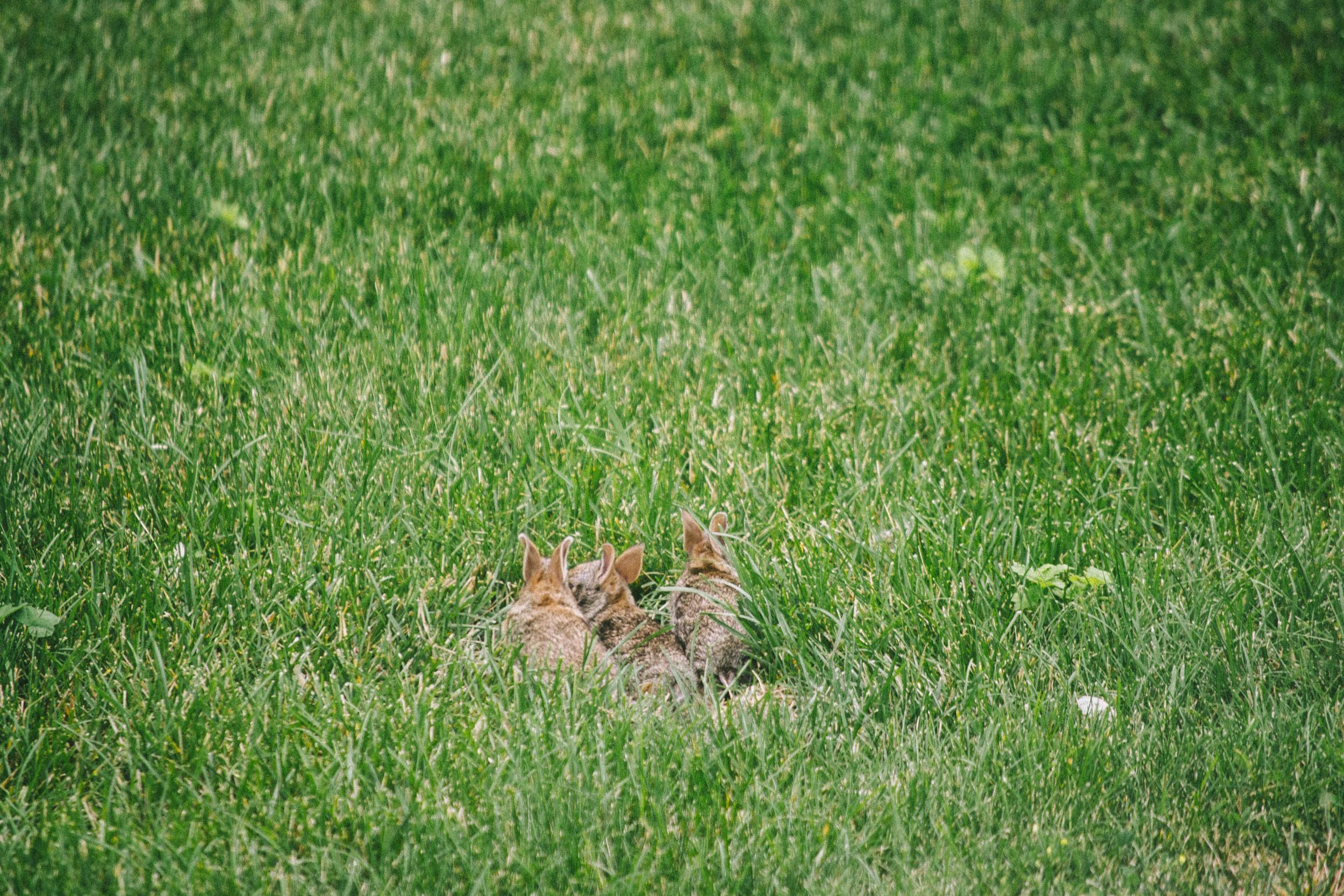 bunny-17.jpg