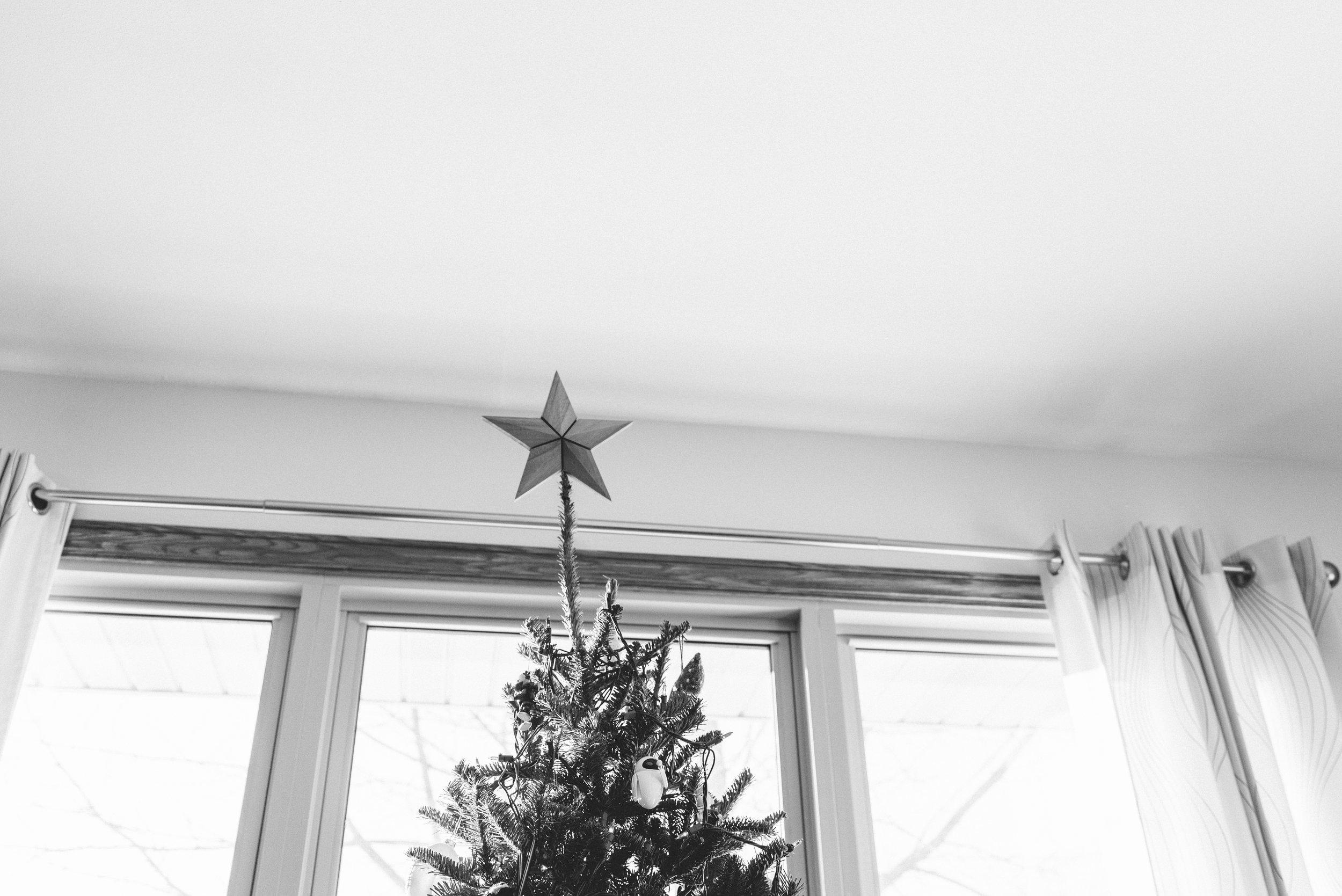 tree-3.jpg