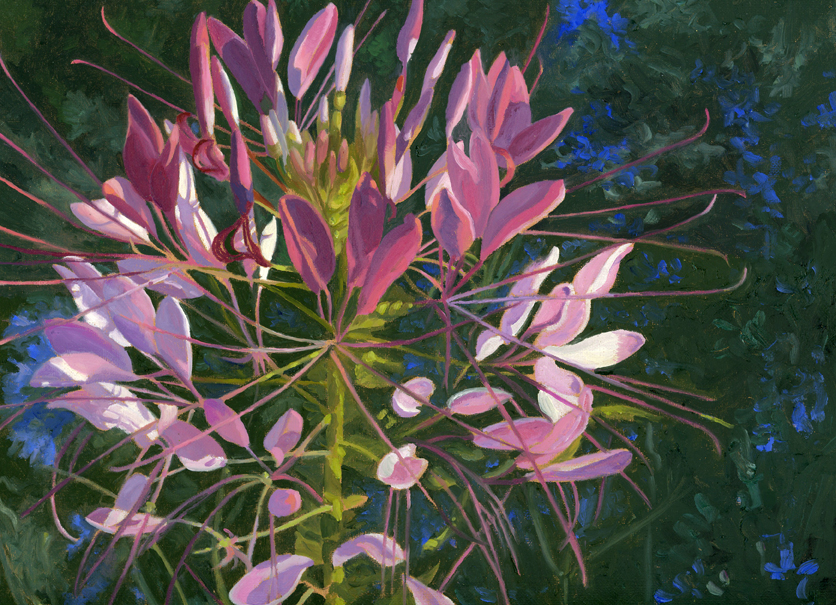 Cleome and Larkspur smaller.jpg