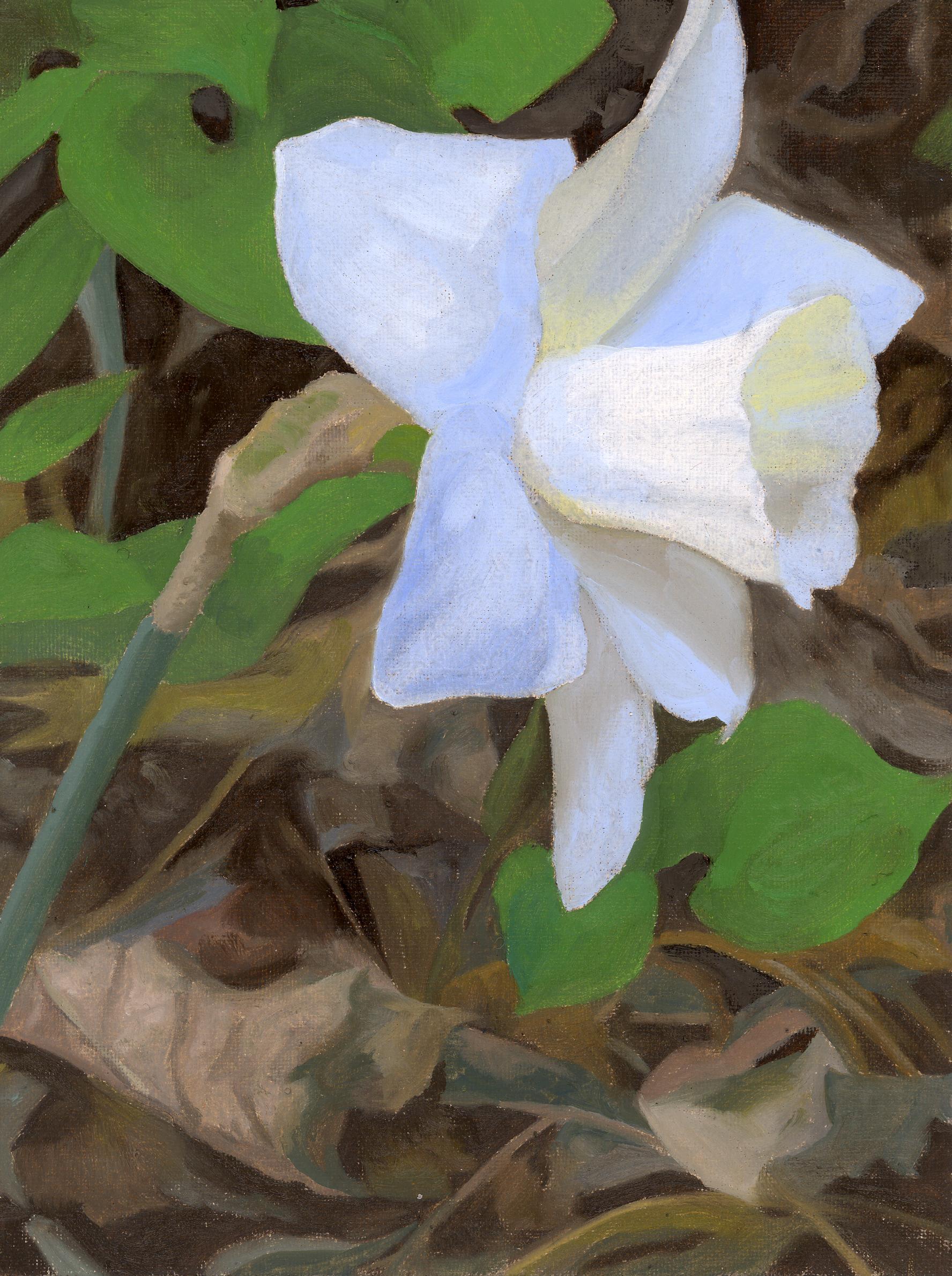 white daffodil.jpg