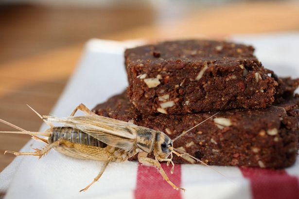#FAD: Cricket bars. Hungry?