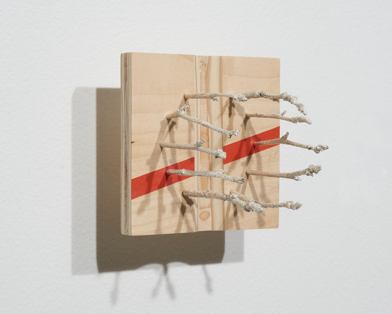 SweetGum-Plywood2.jpg