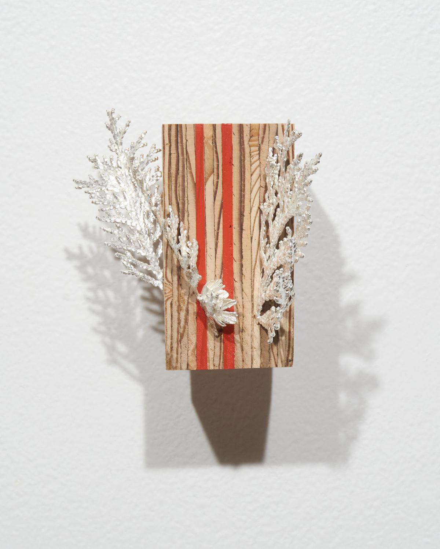 ArtifactsEcofacts-Cedar.jpg