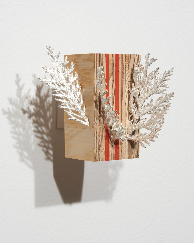 Cedar-Plywood3.jpg