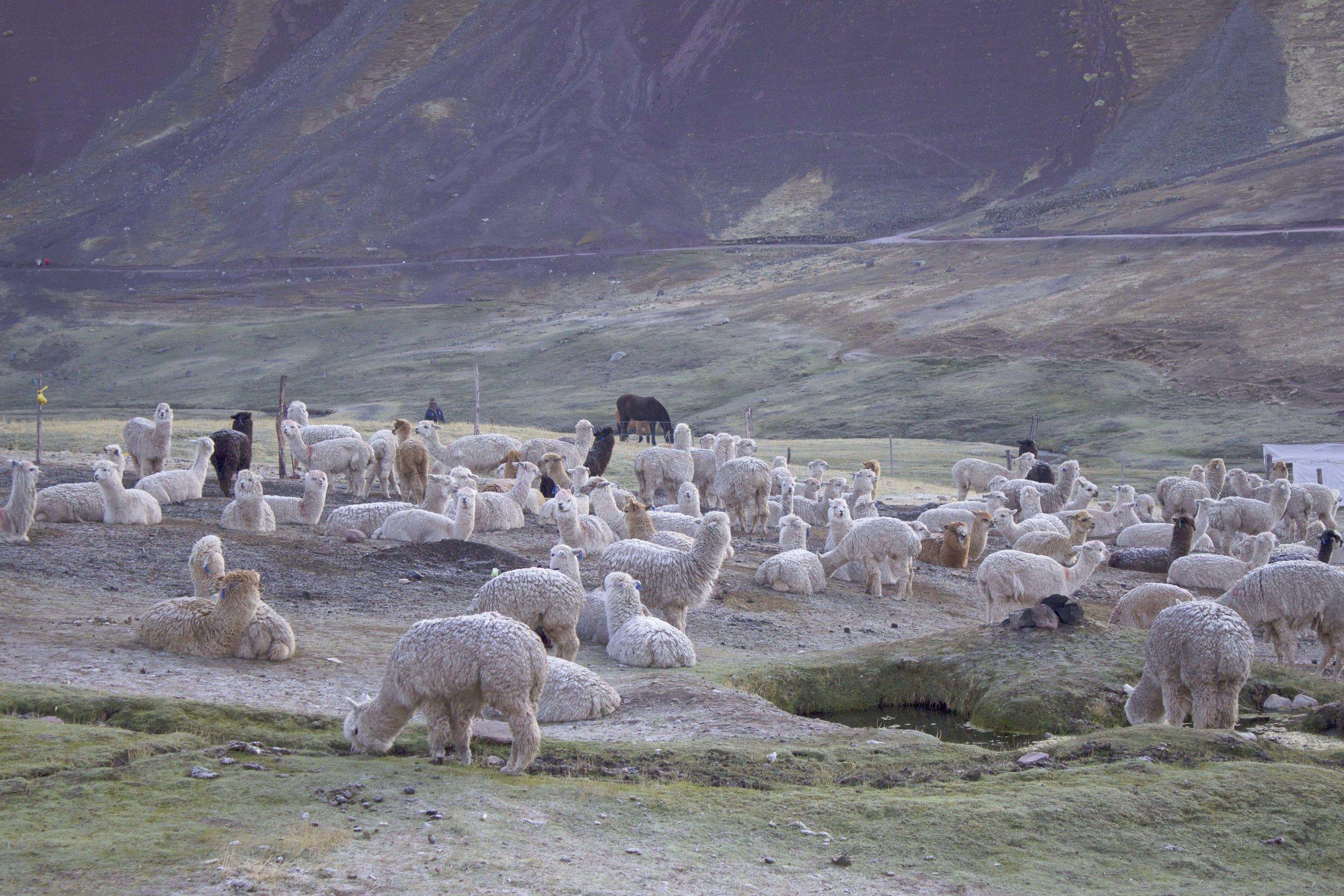 Cusco & Rainbow Mountain24.jpg