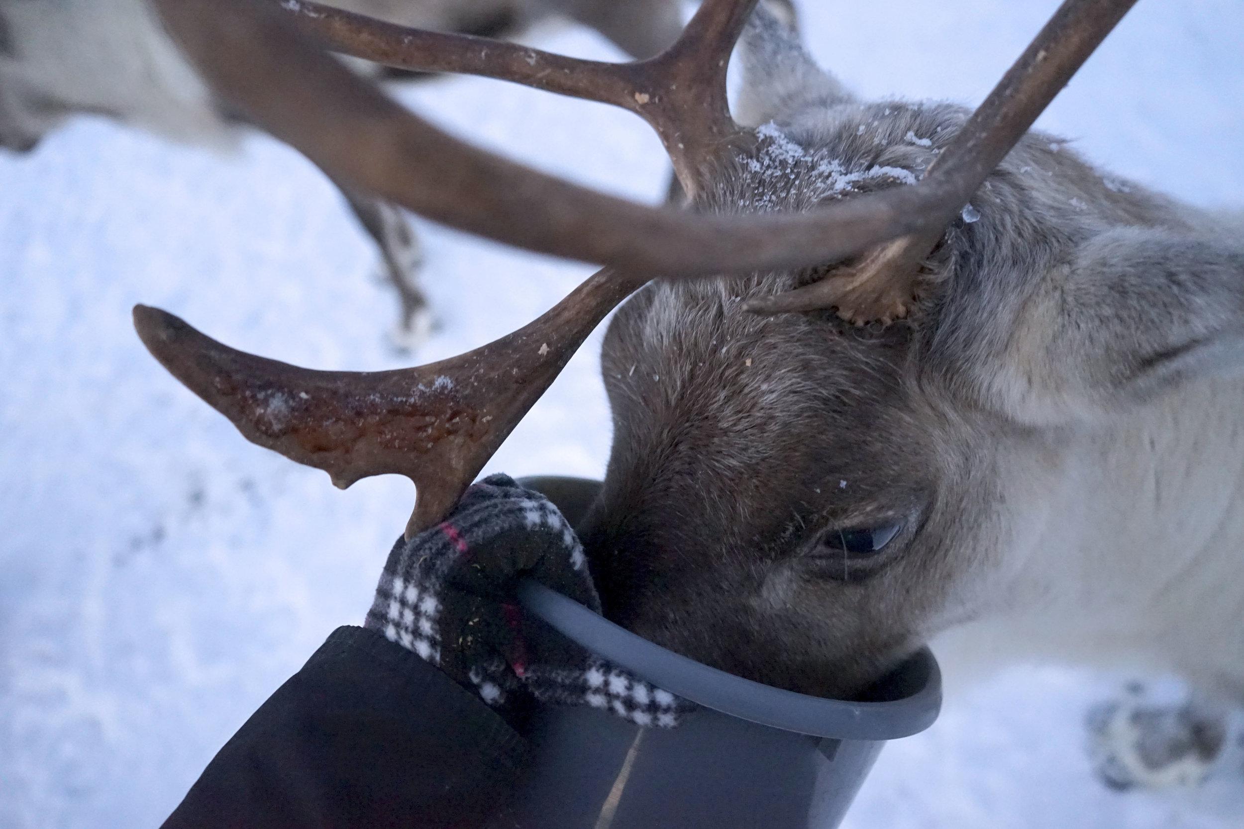 Krity S x Norway 2018_40.jpg