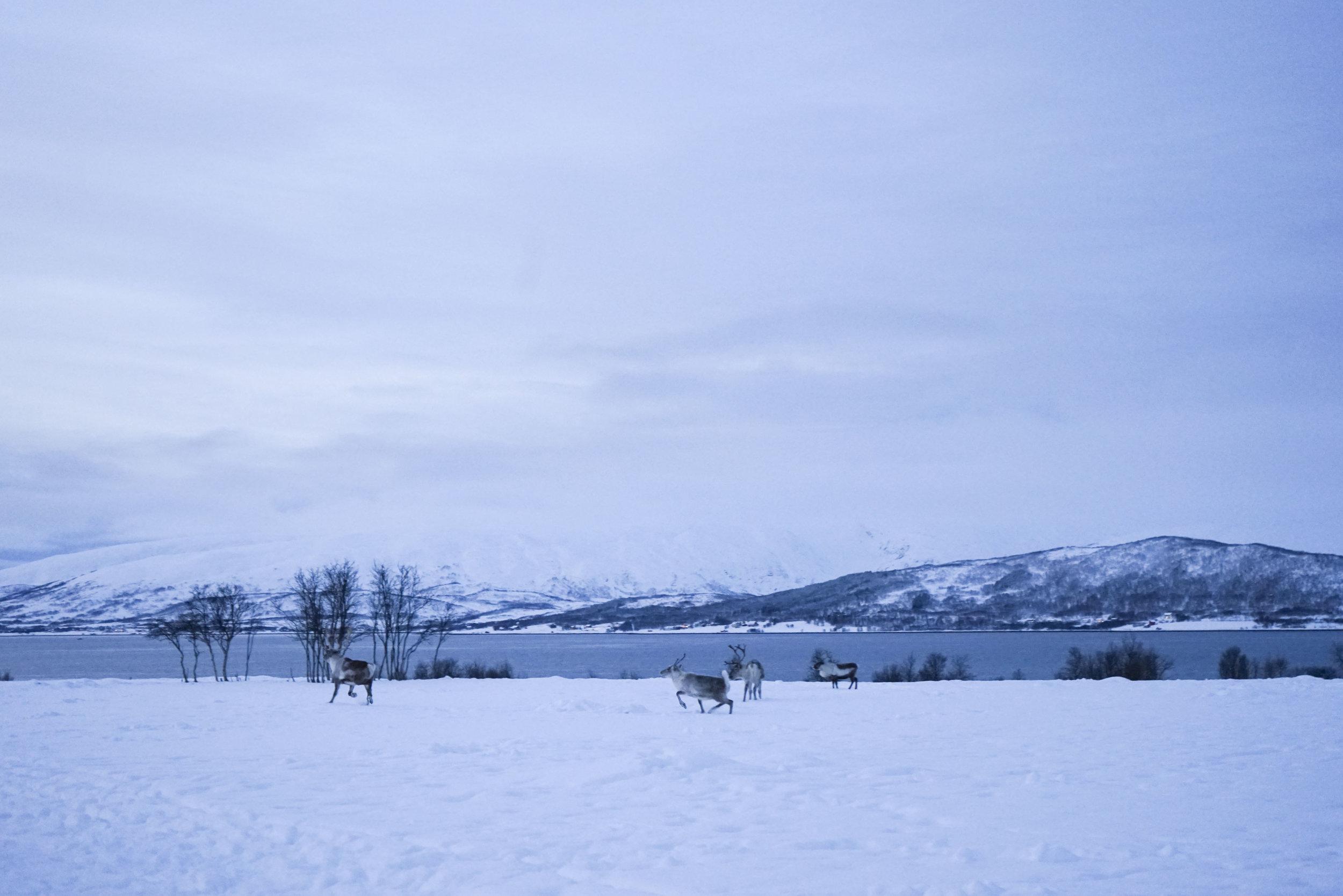 Krity S x Norway 2018_49.jpg