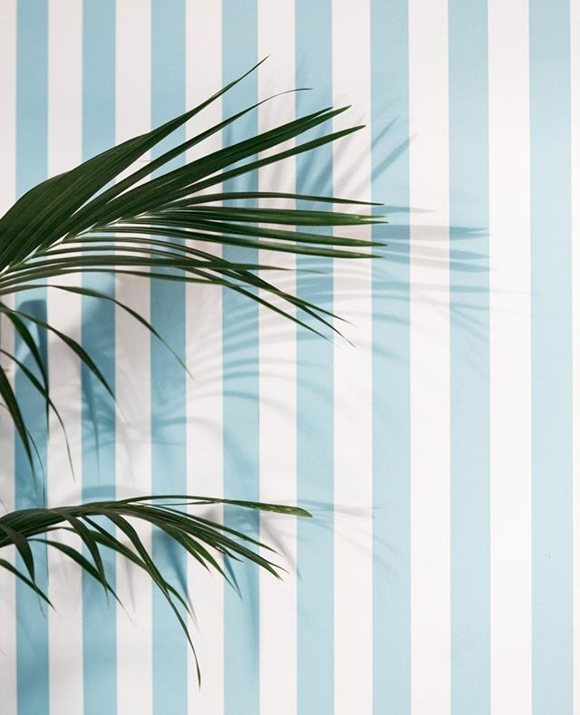 Palms on the striped wall #theboathousegroup #mobydickswhalebeach #palms #styling #weddings #sydneyevents