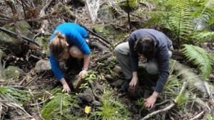 Surveying stream beds for Hochstetters frogs  - Team from EcoGecko