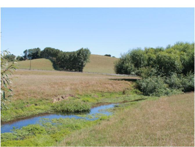 Typical stream in an agricultural catchment. (Photo: F. Lee)