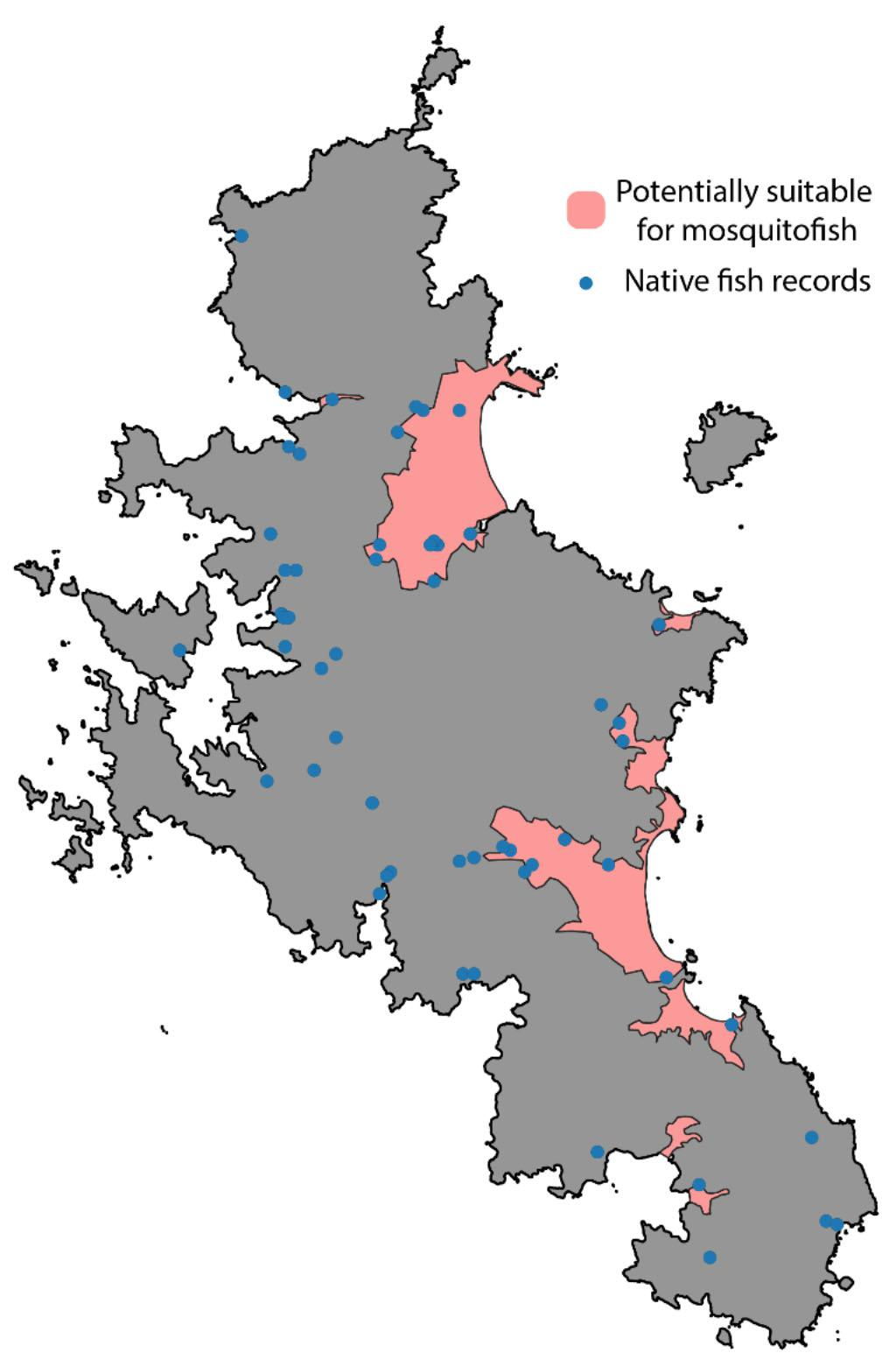 Figure 1: Aotea | Great Barrier, with potentially suitable habitat for mosquitofish shown in pink. Blue dots are recorded sightings of native fish from the NZ Freshwater Fish Database (NZFFD) (1).