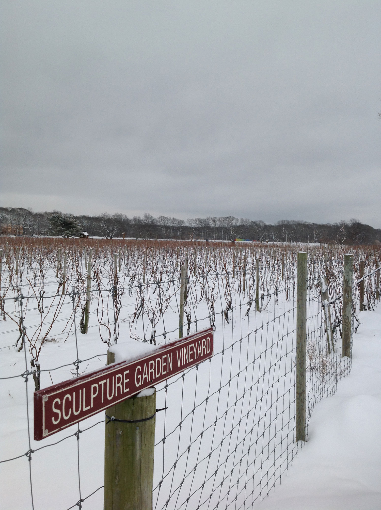 dormant vineyard in winter snow