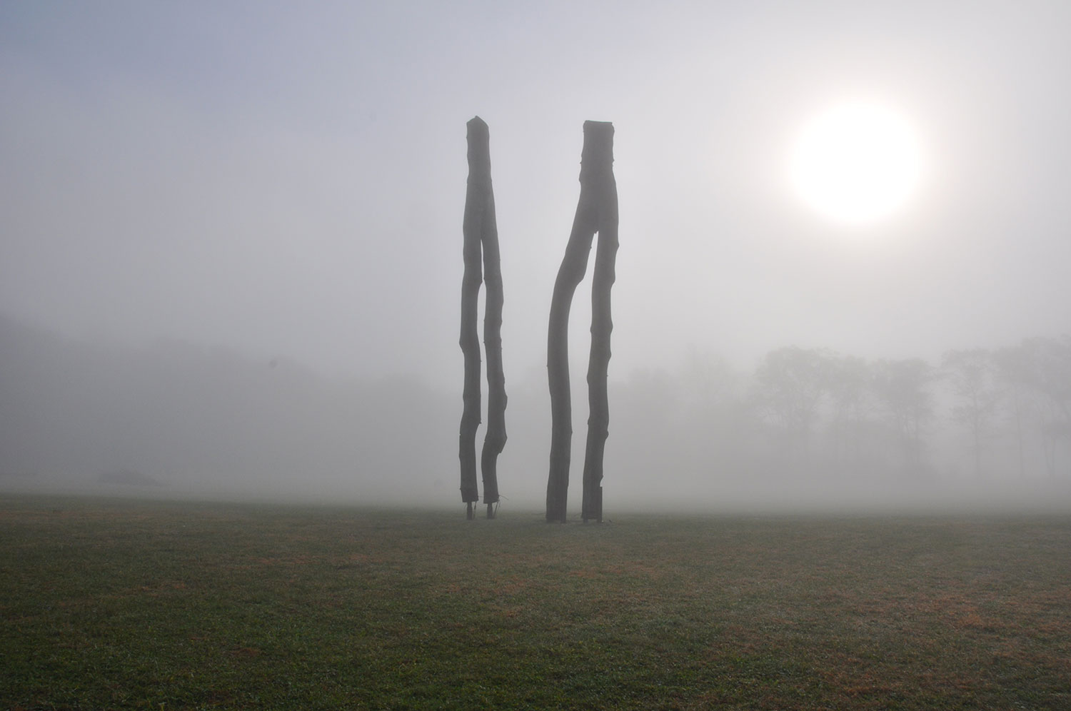 wood sculpture in fog