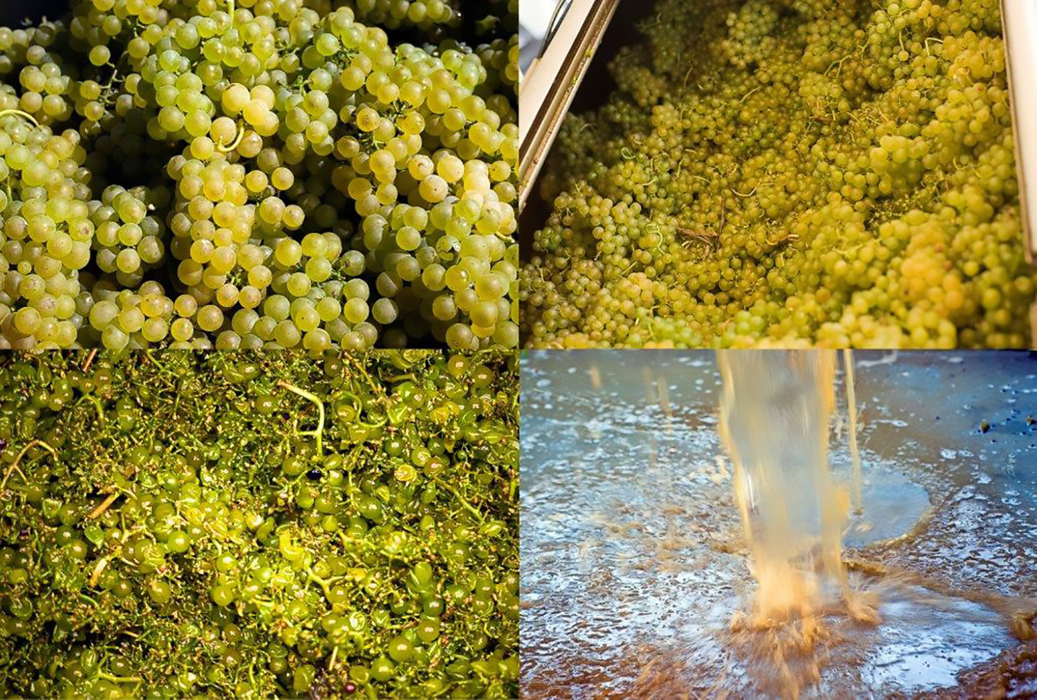 different stages of white wine pressing
