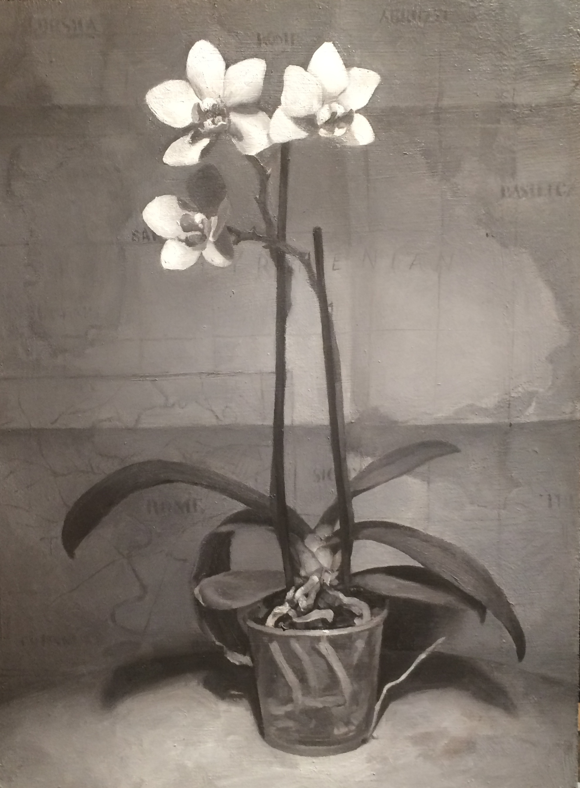 Italian Orchid