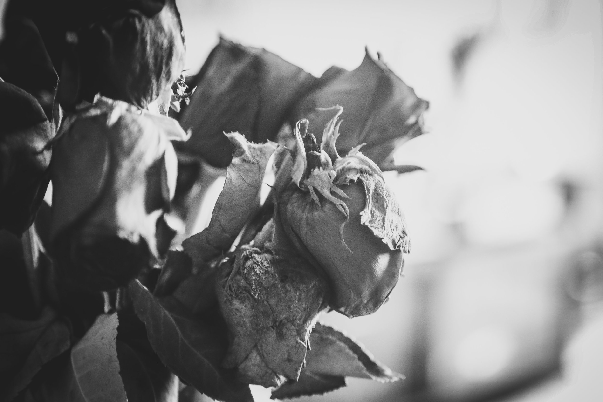 Finding beauty in withered roses was one of the most difficult things I learned to do.