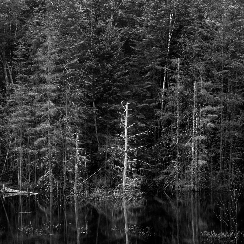 TreesWater2.55.jpg