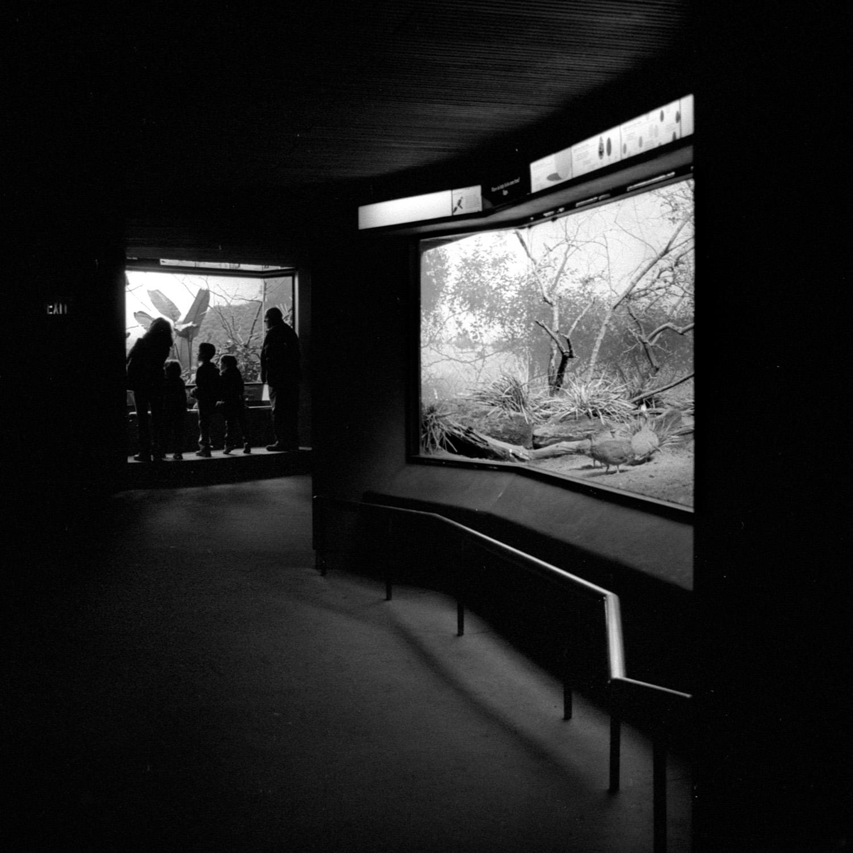 Bronx Zoo (34).jpg