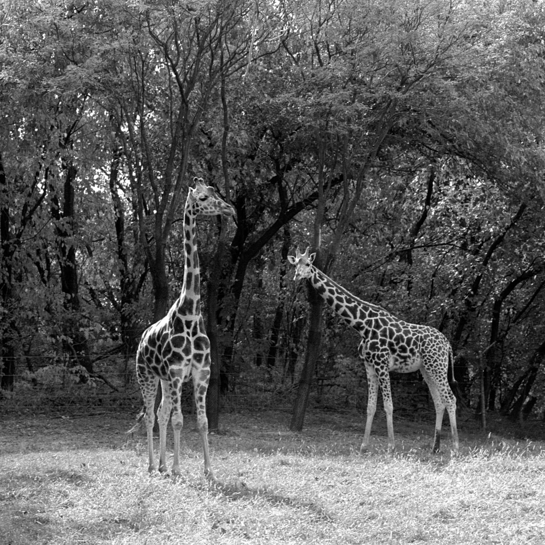 Bronx Zoo (60).jpg