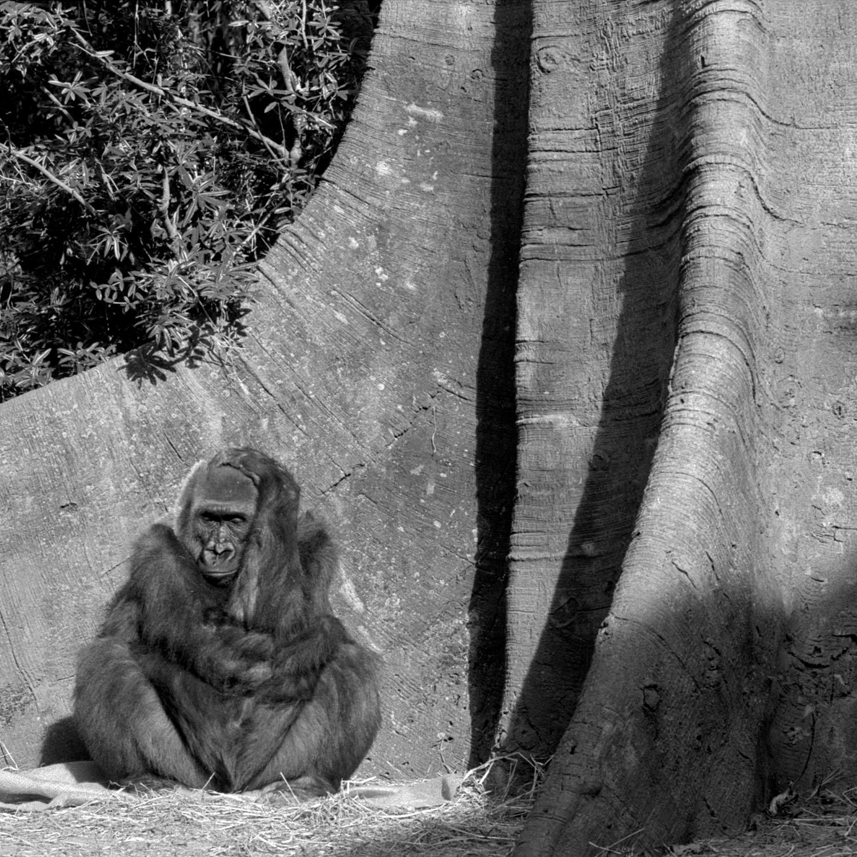 Bronx Zoo (75).jpg