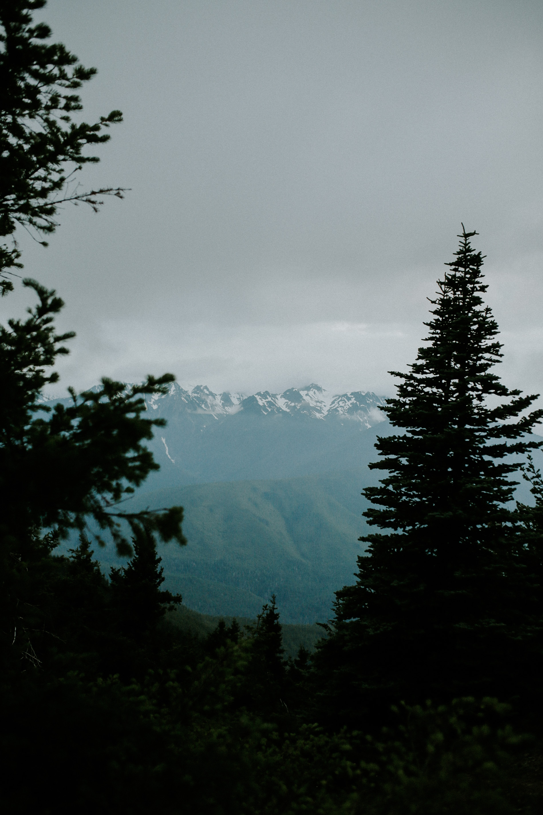 Hurrican ridge -155.jpg