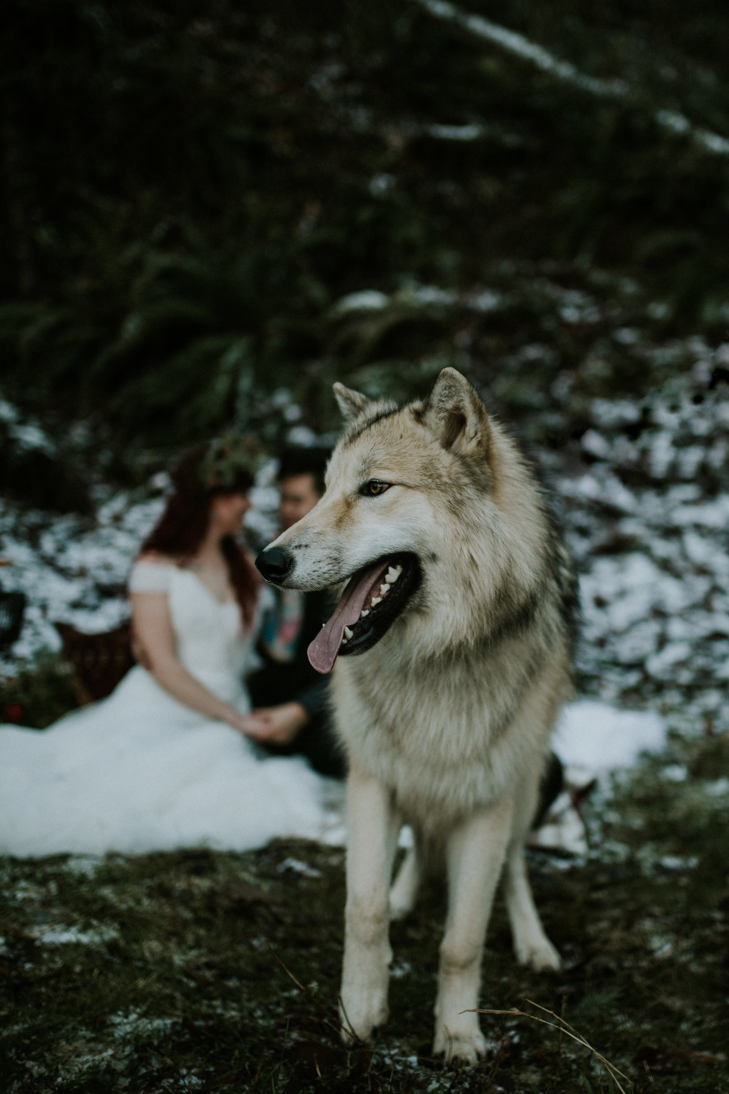 Latourell falls elopement photography BreeAnna Lasher