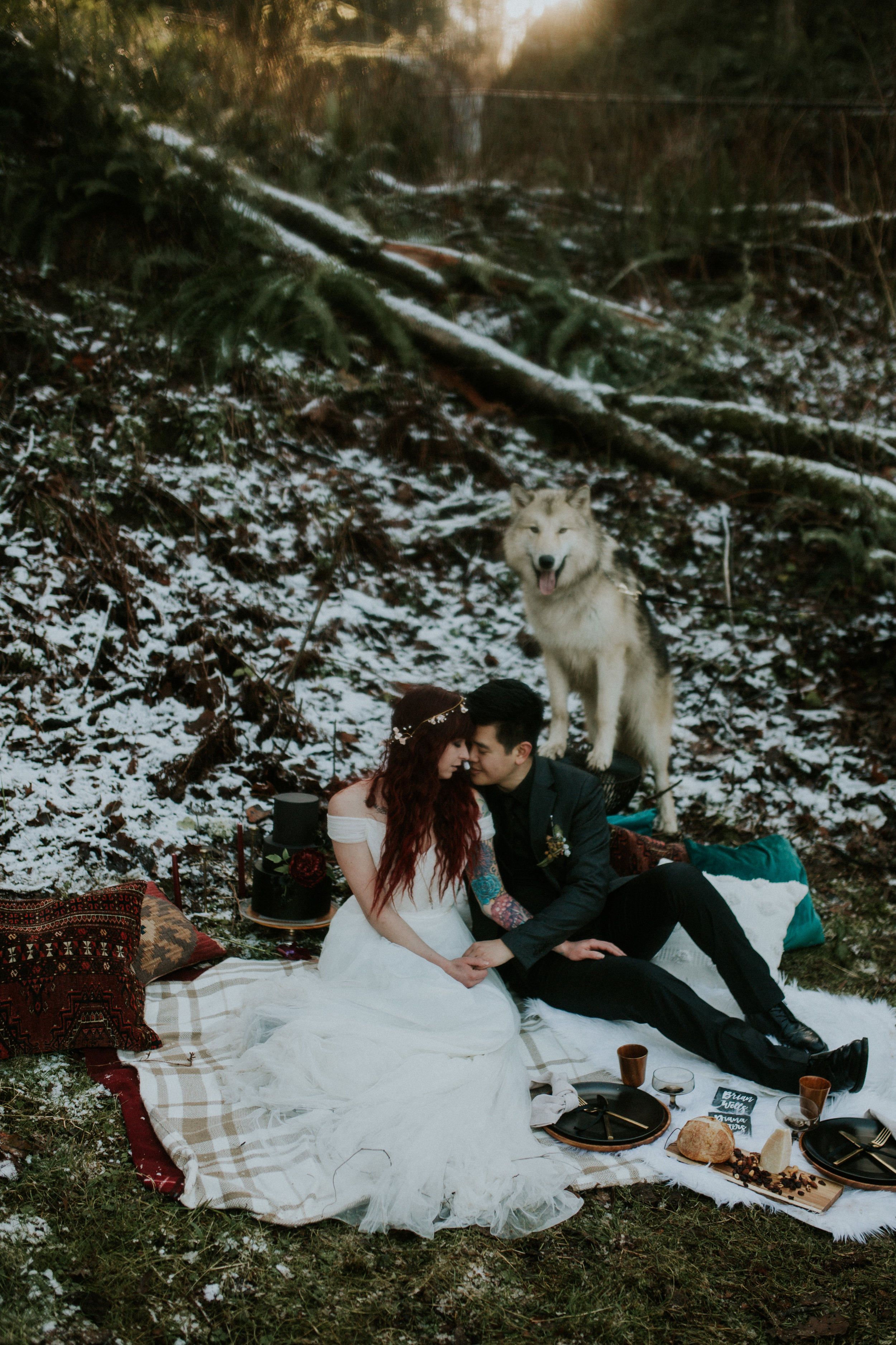 elopement at latourel falls state park with wolf dog photography