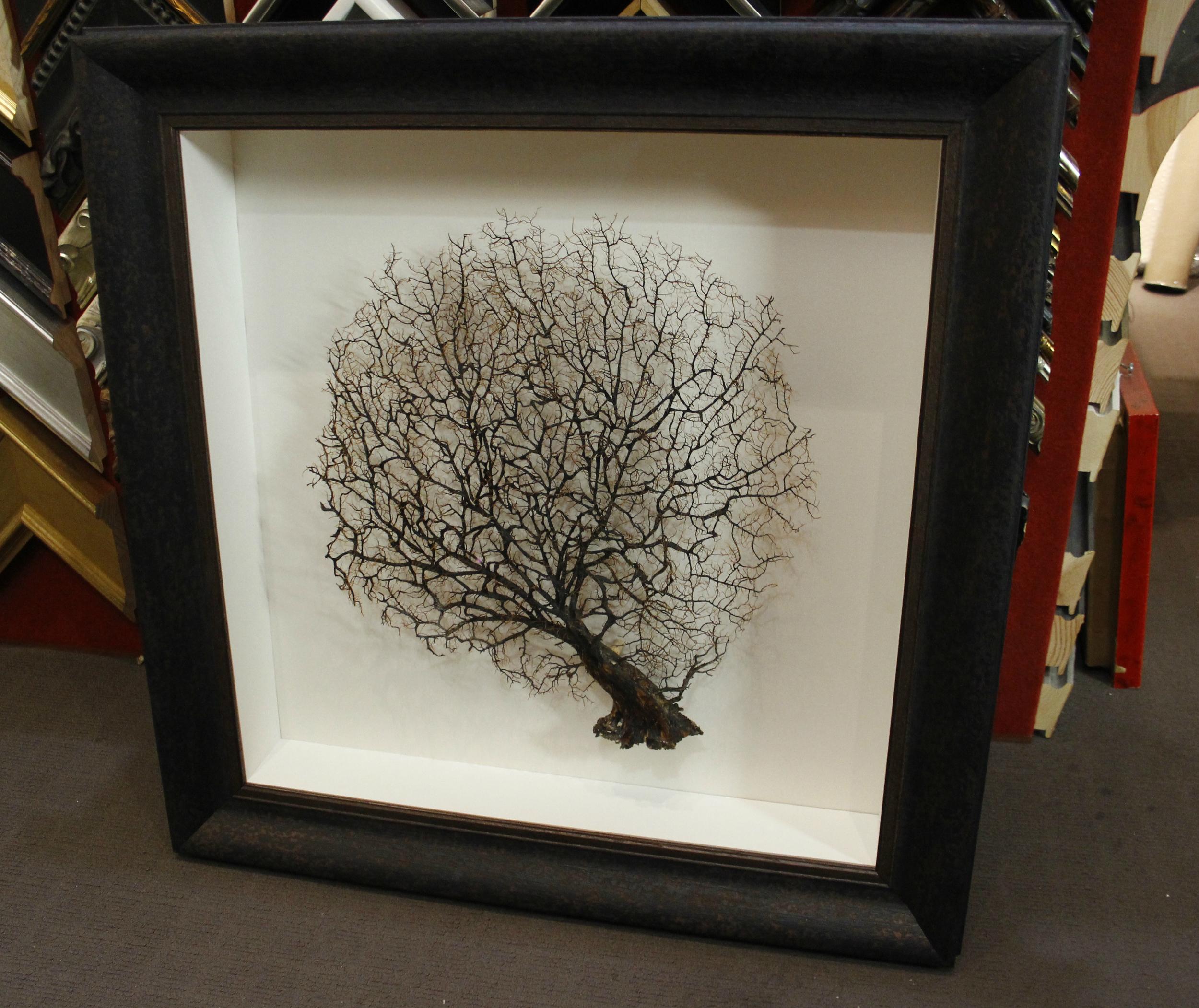 Custom framed coral fan.jpg