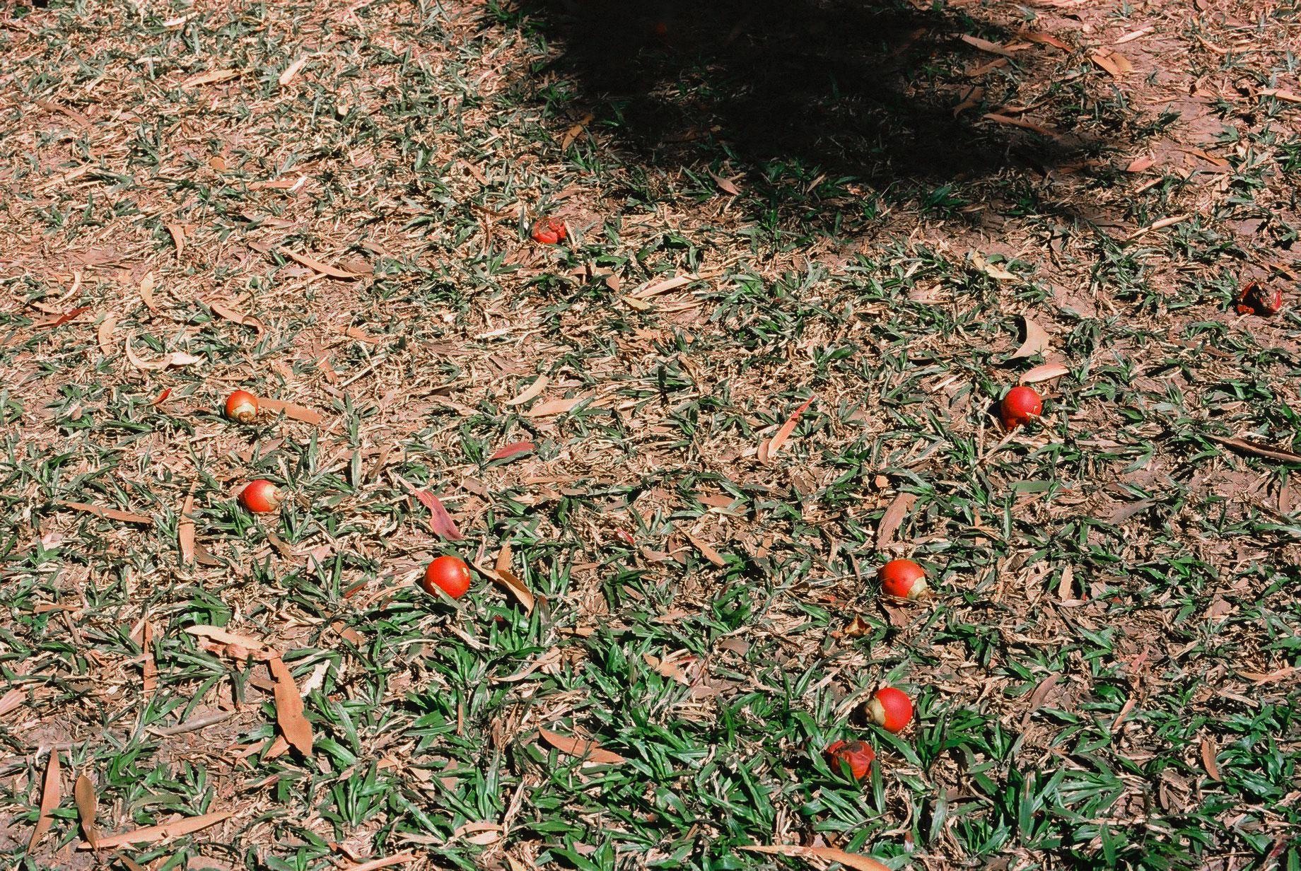 Nature Walk #2, Queensland
