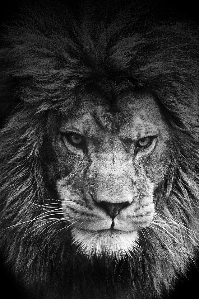 Legendary Lion,  freeios7