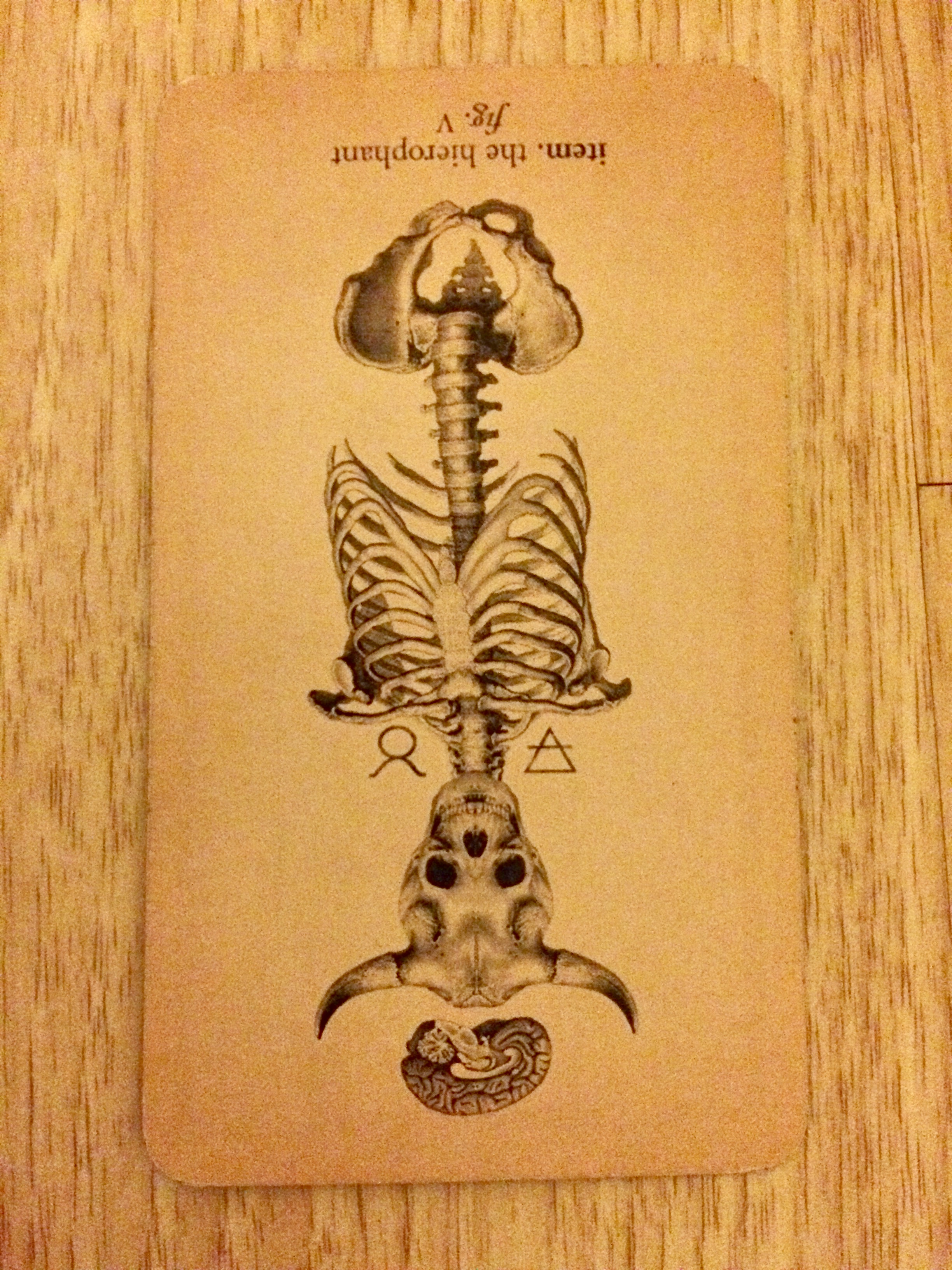 The Hierophant from Antique Anatomy Tarot