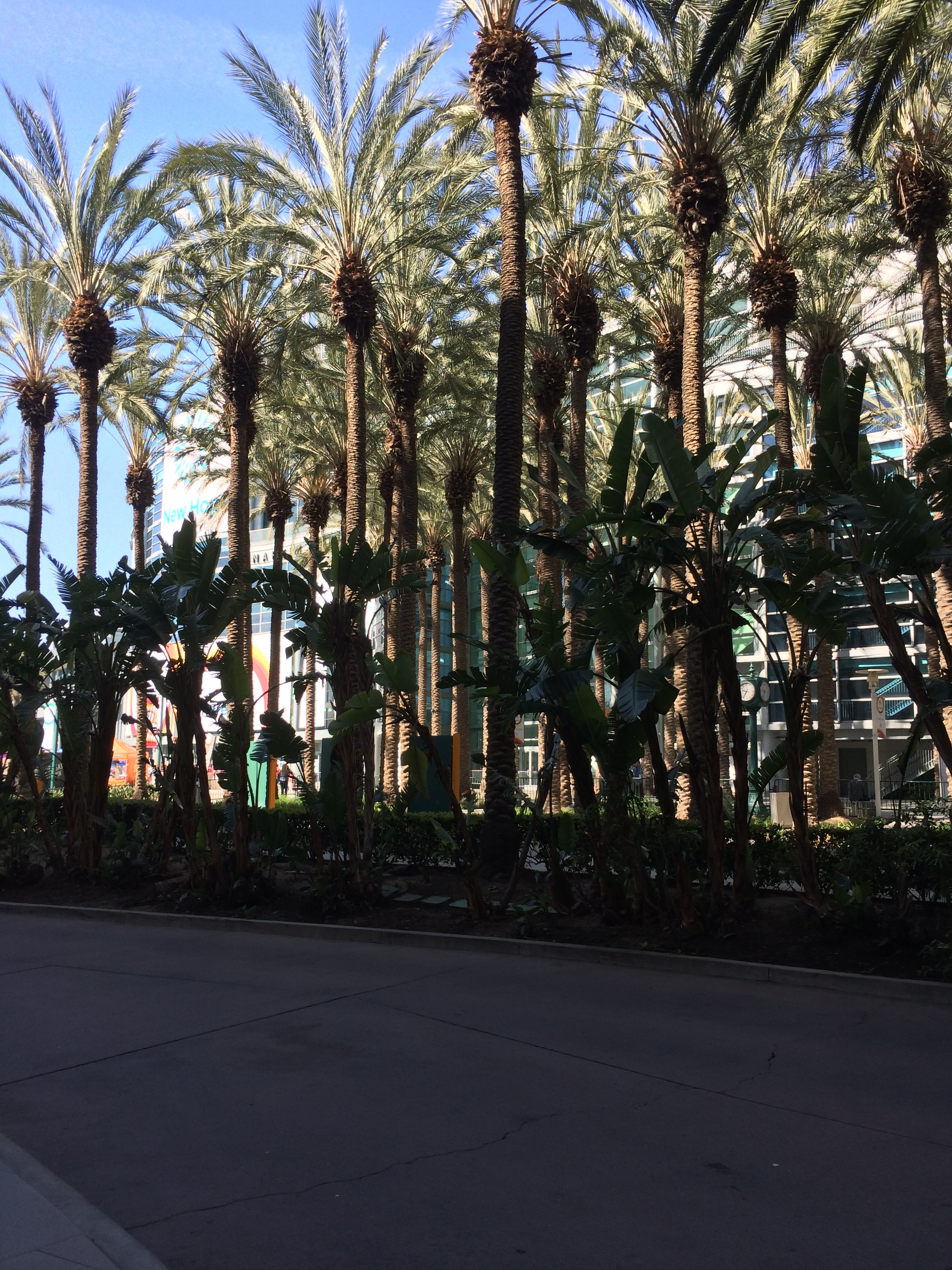 Great view of palm trees from the Expo!