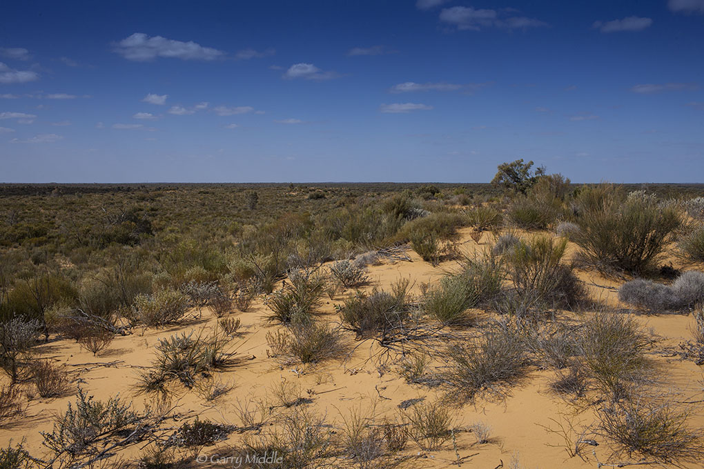 GVD view from Yellow sand dune.jpg