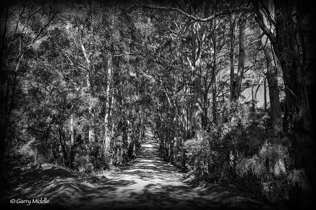 Gallery_1_small_Karri forest road.jpg
