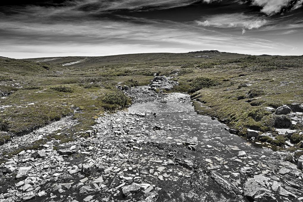 Small_Copyright_Plateau Creek B&W&Green.jpg
